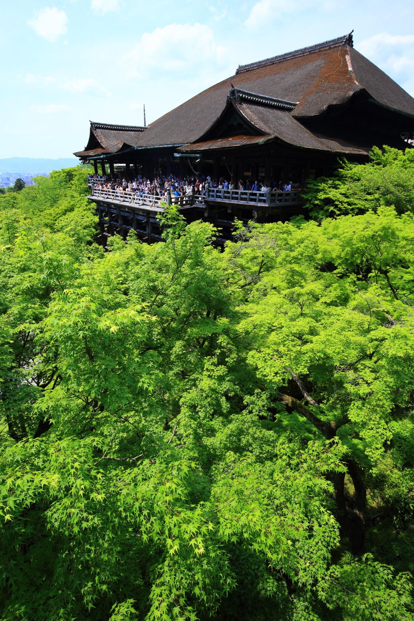 清水寺の清水の舞台と鮮やかな新緑