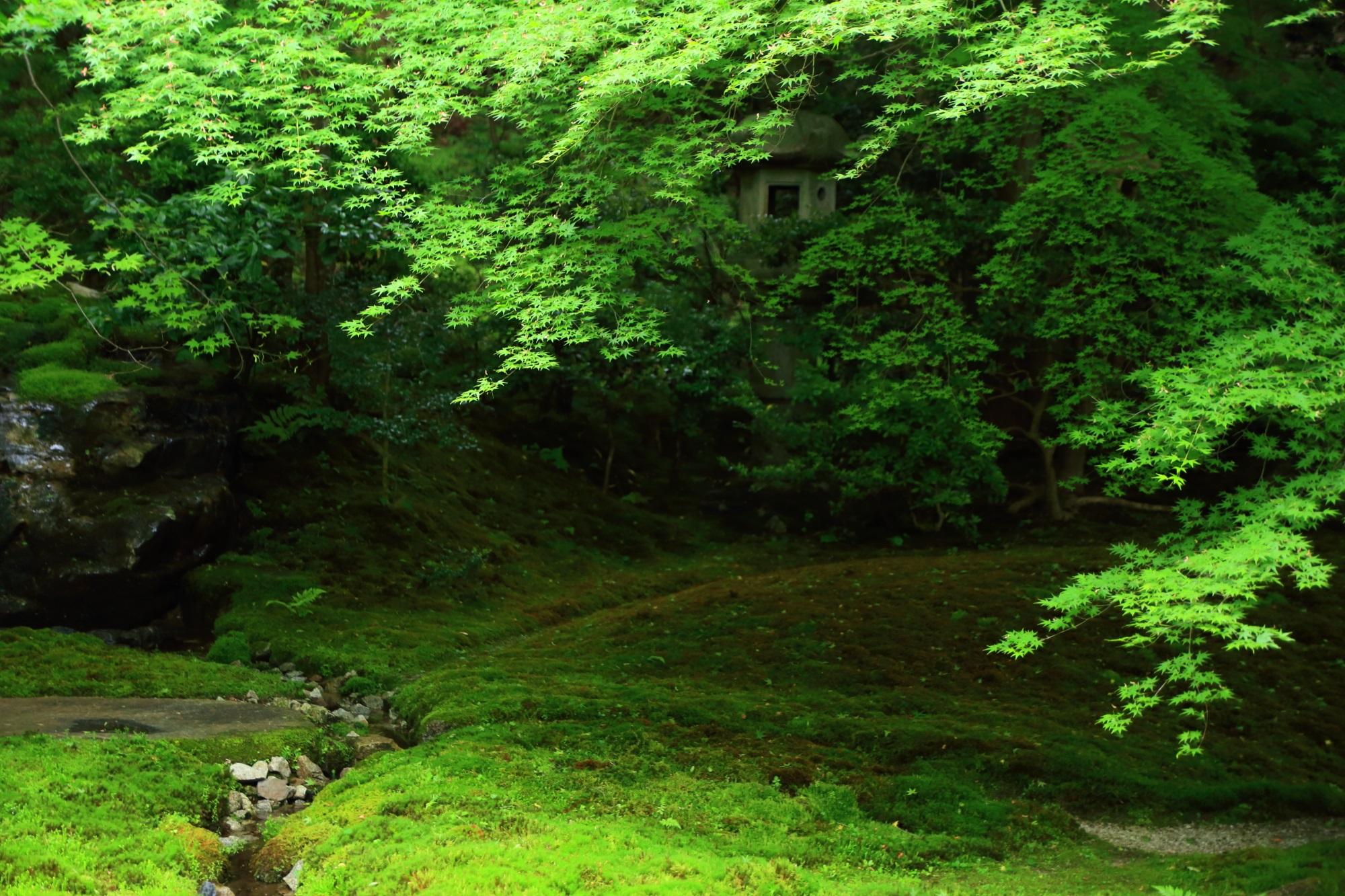 写真 瑠璃光院 高画質 苔 新緑 瑠璃の庭