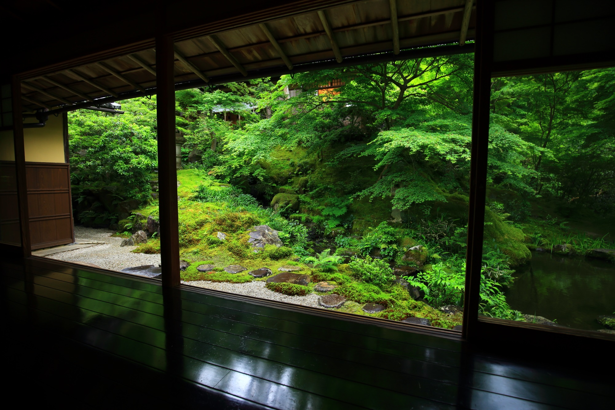 blue maple and moss Ruriko-in Temple Kyoto Japan