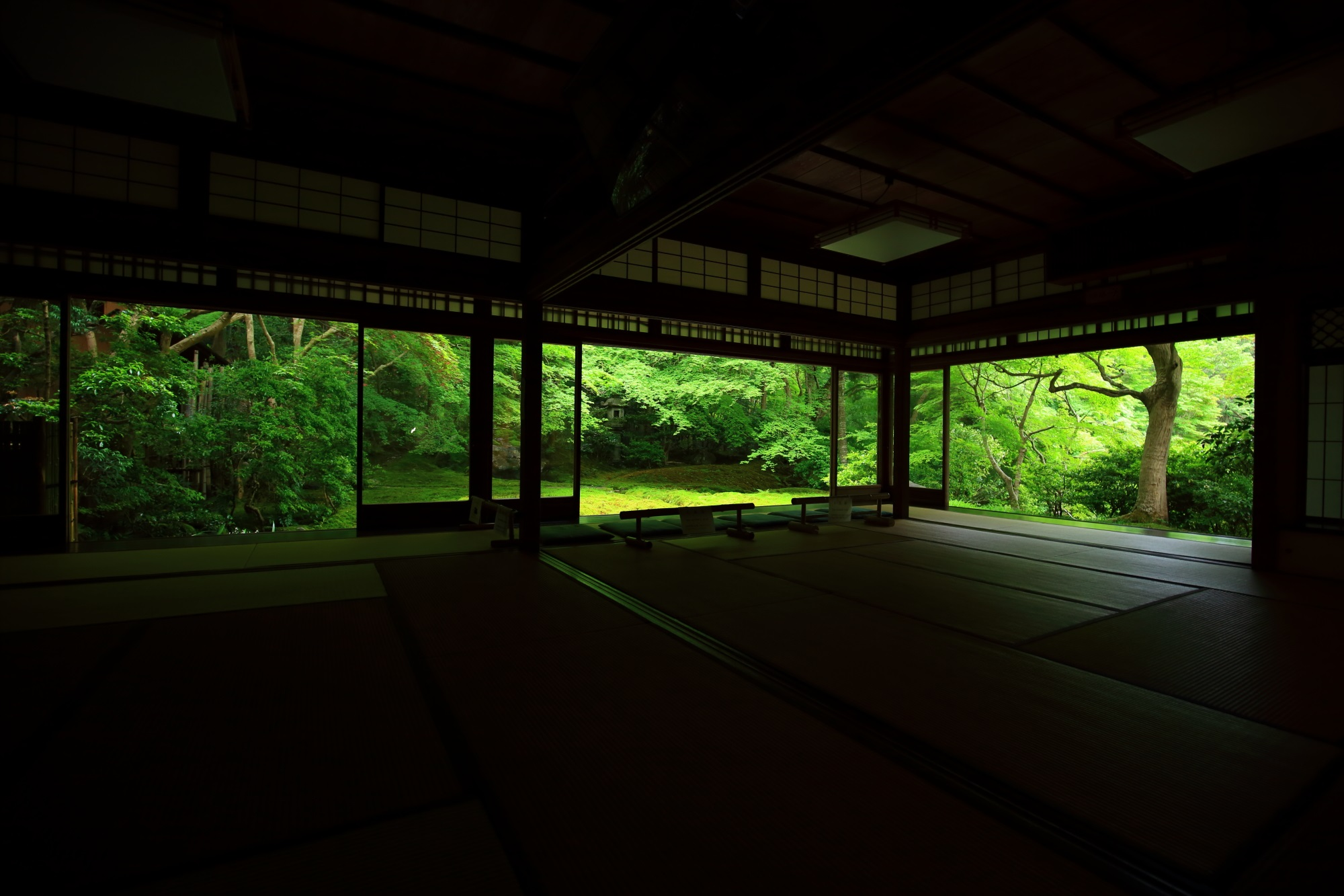 瑠璃光院の美しい新緑の瑠璃の庭