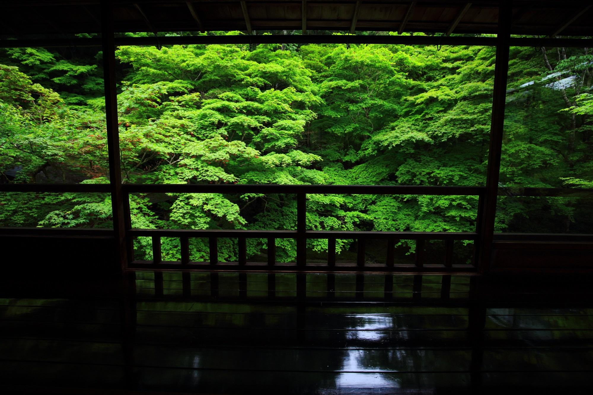 瑠璃光院の書院二階から眺めた深い緑の瑠璃の庭