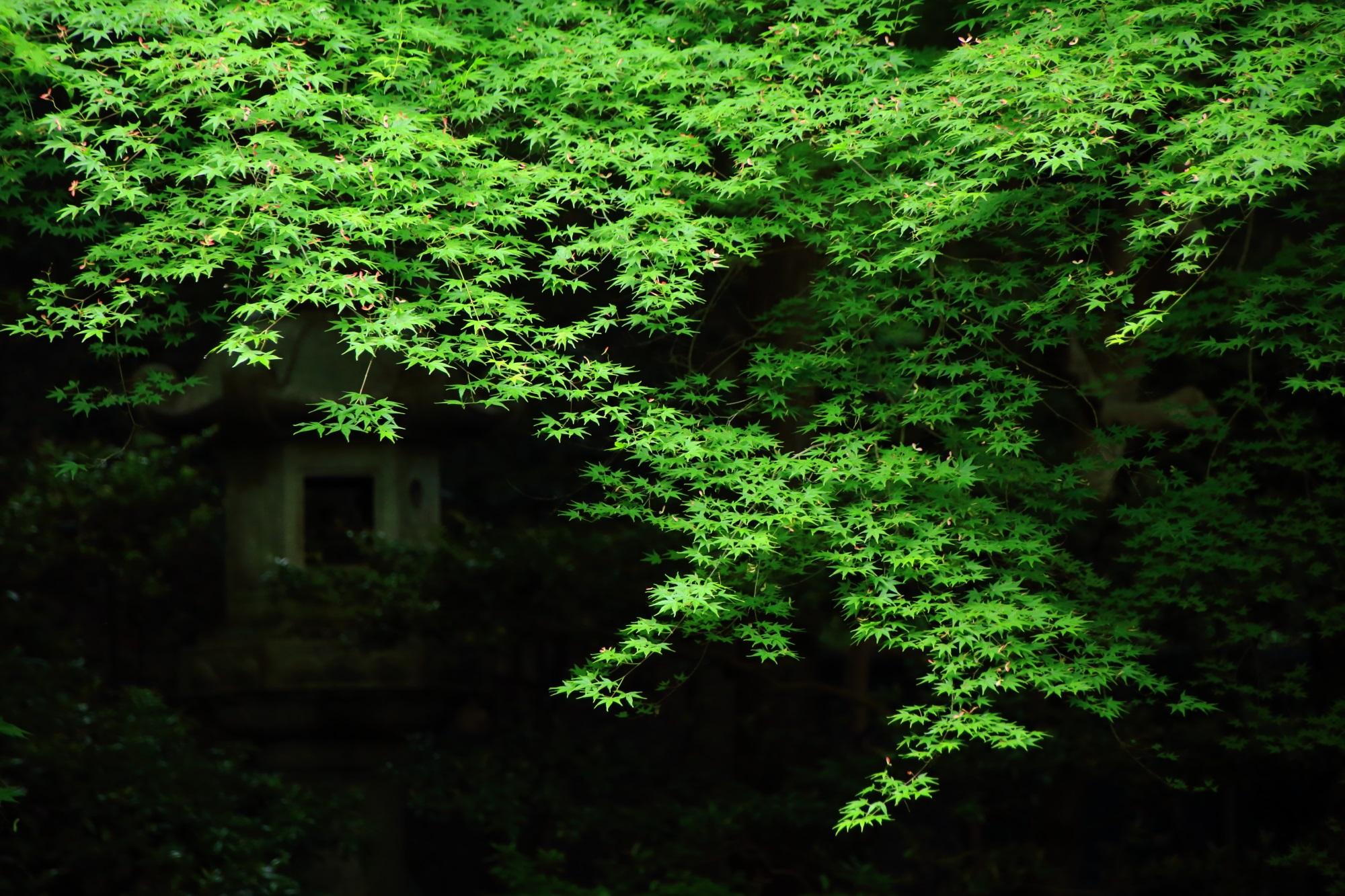 るりこういんの見事な新緑と燈籠