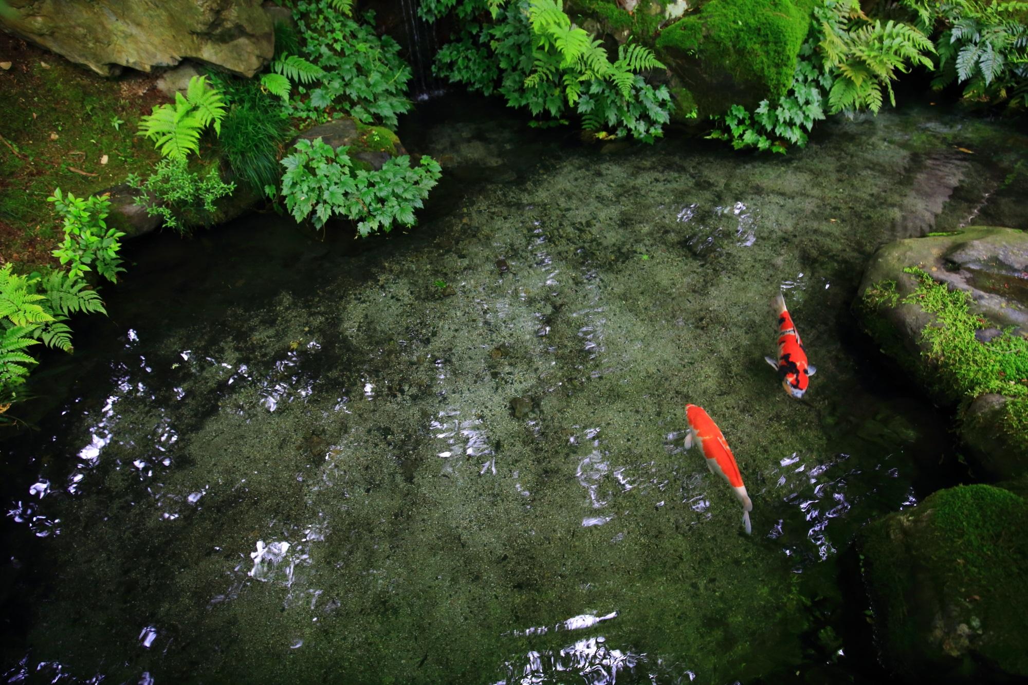 池 鯉 瑠璃光院 綺麗