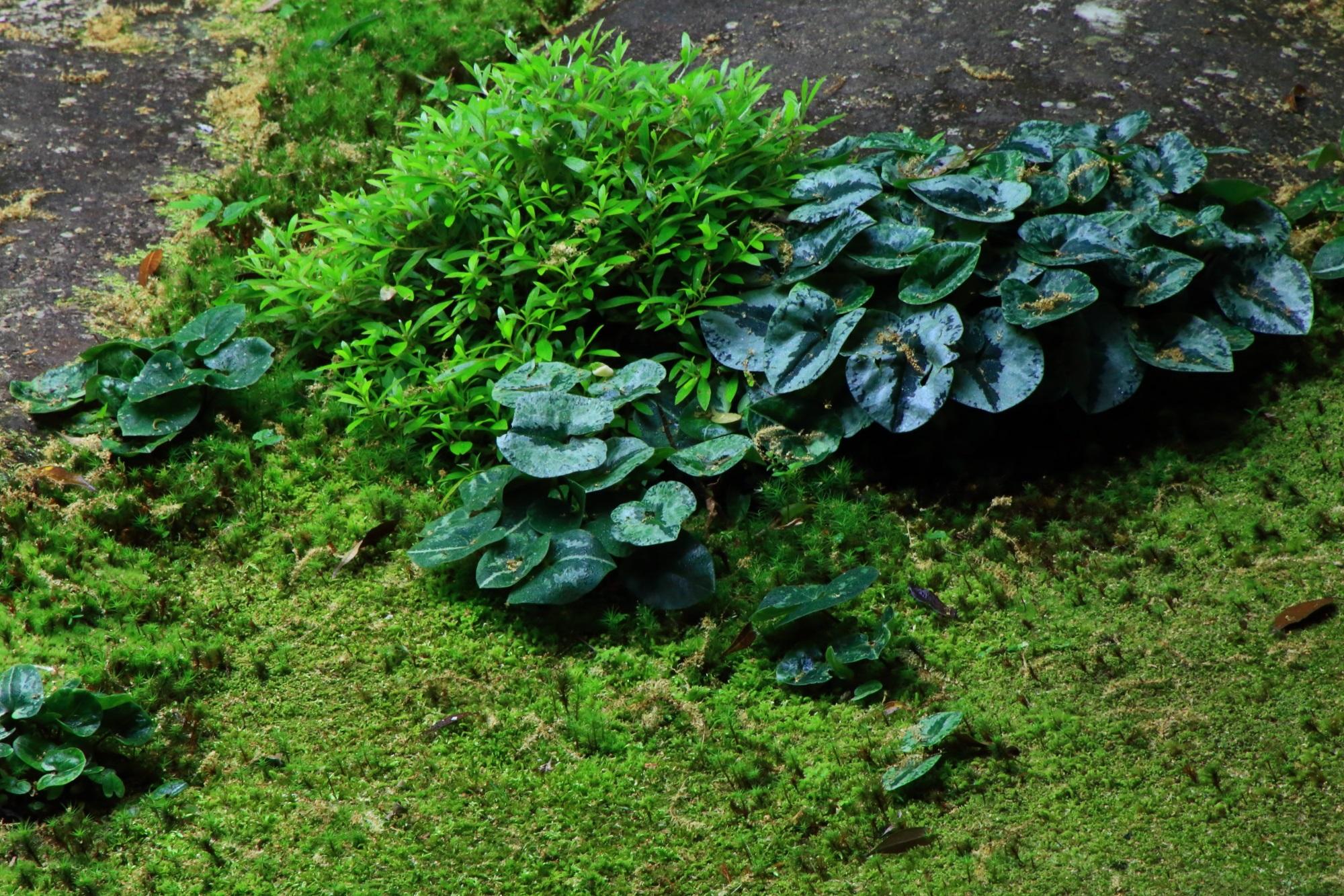 蓮華寺の美しい苔と緑