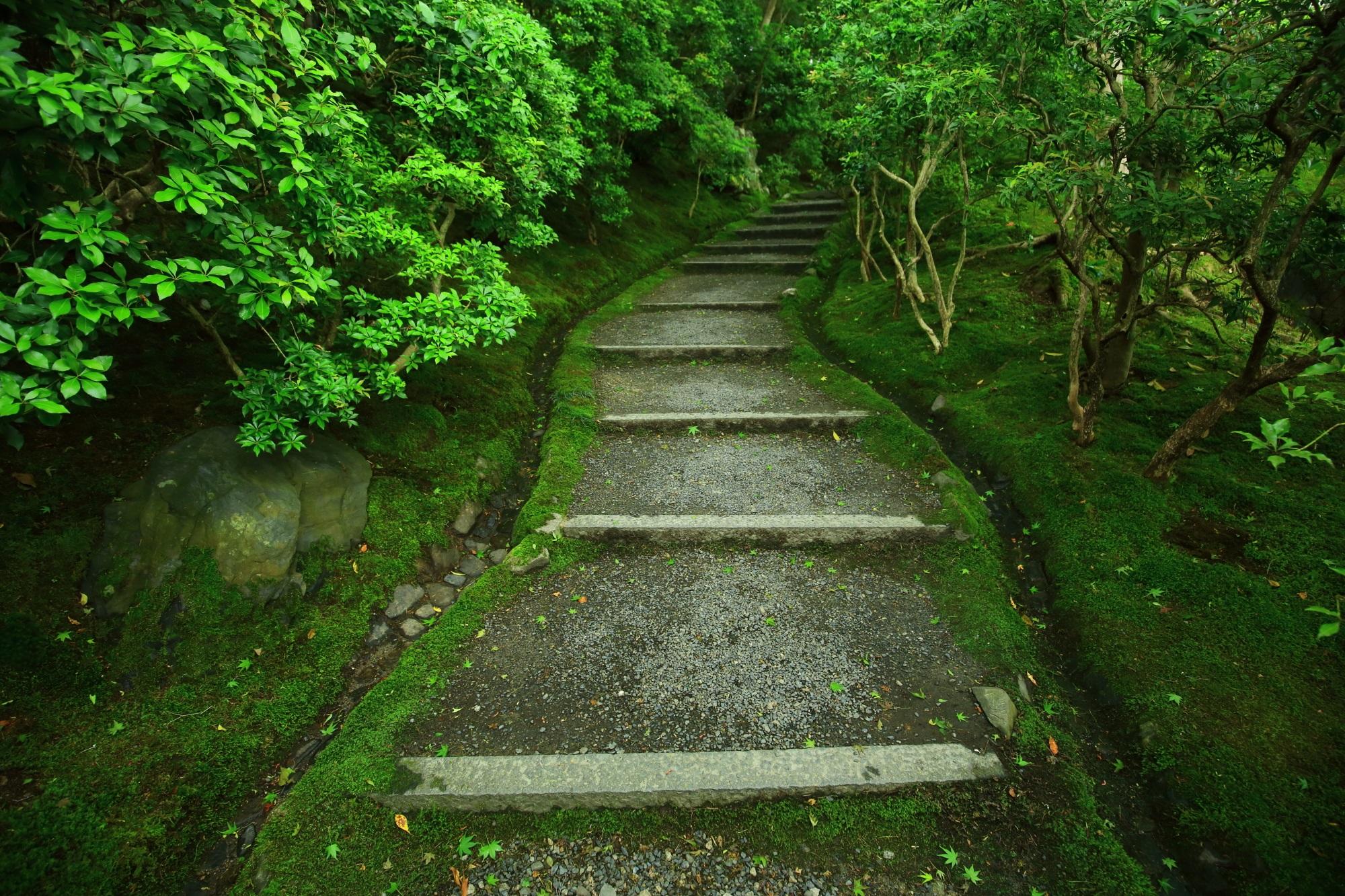 瑠璃光院の見事な苔と緑につつまれた参道