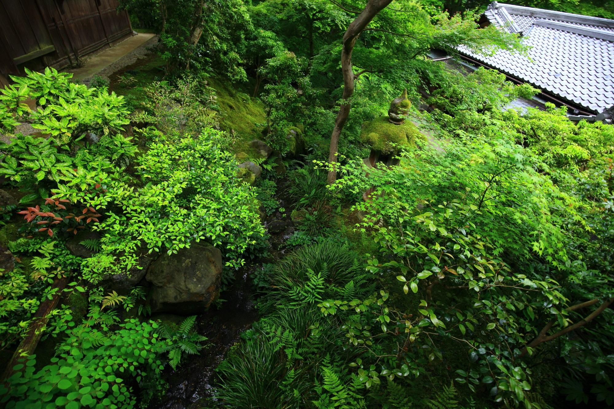 瑠璃光院の渡廊下から眺めた臥龍の庭