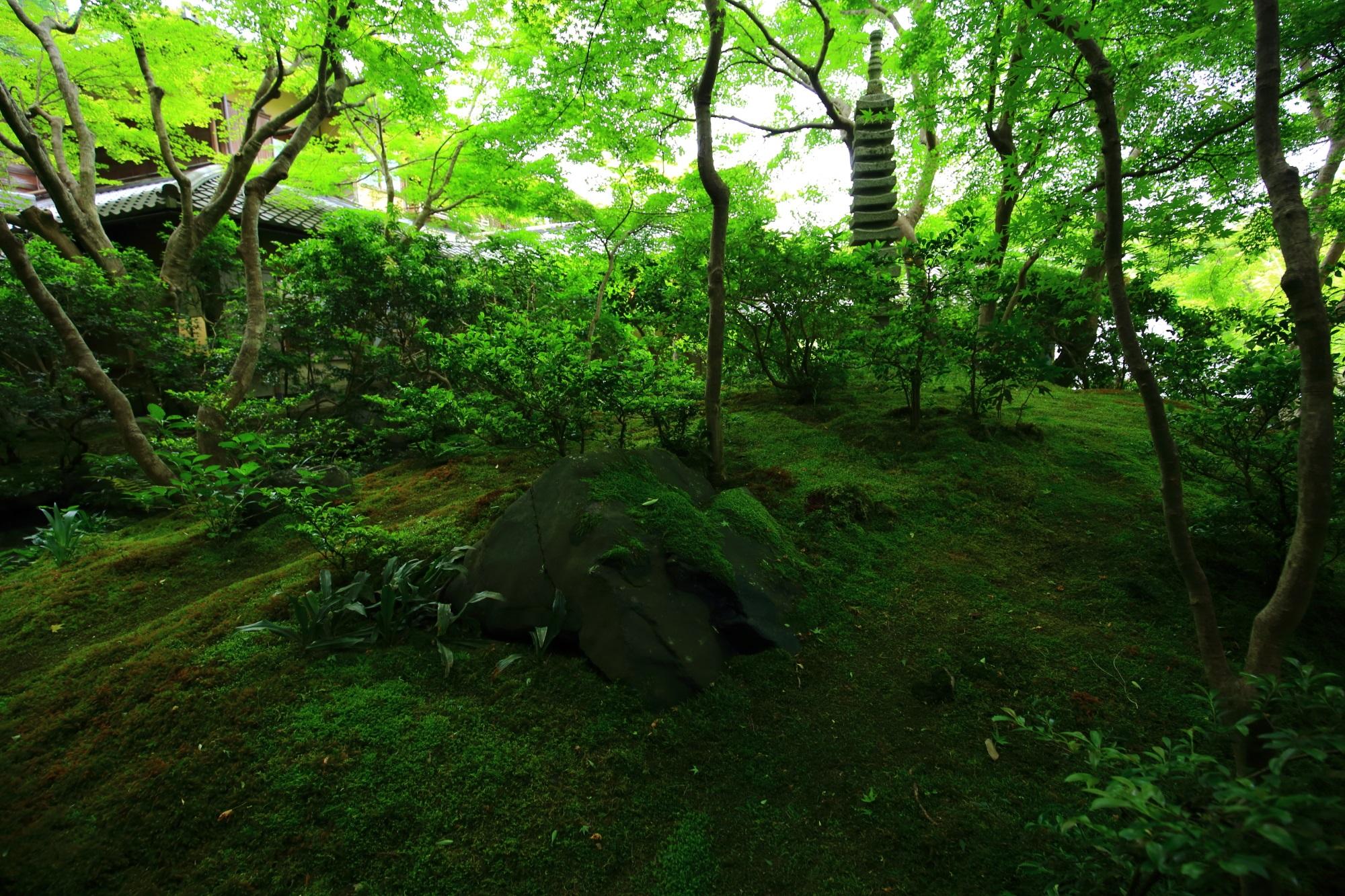 山露路の庭 瑠璃光院 新緑 苔