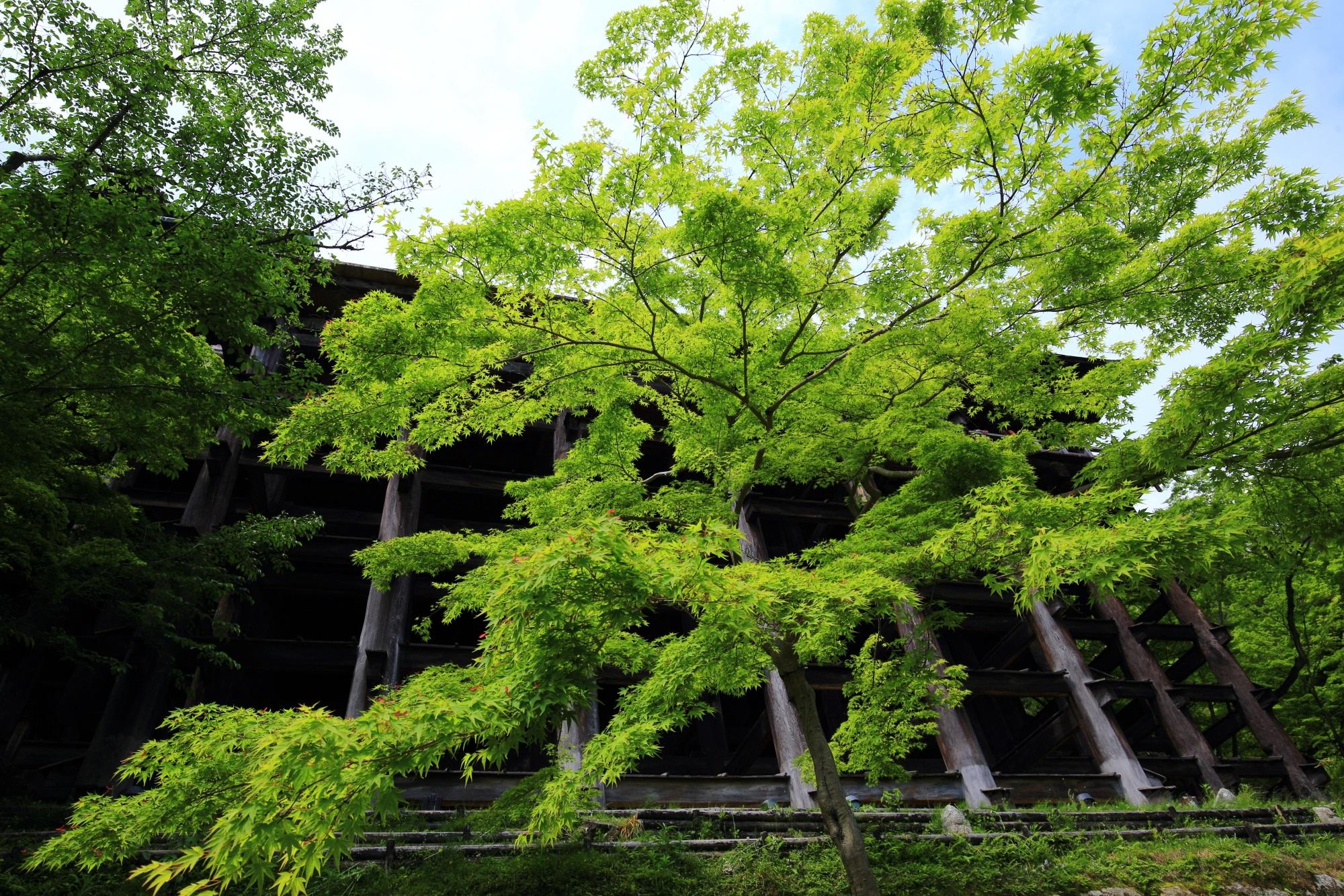 清水寺の下から見上げる清水の舞台と新緑