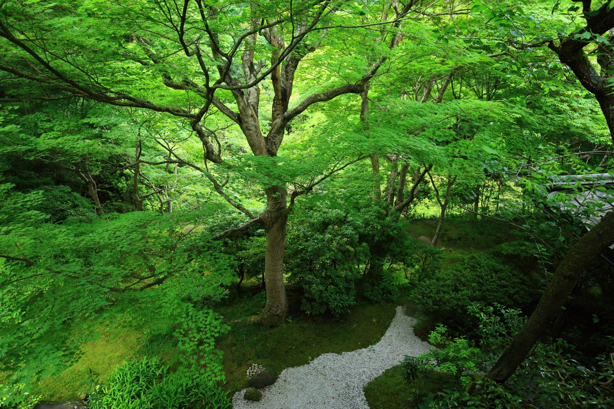 深い緑につつまれた瑠璃光院庭園