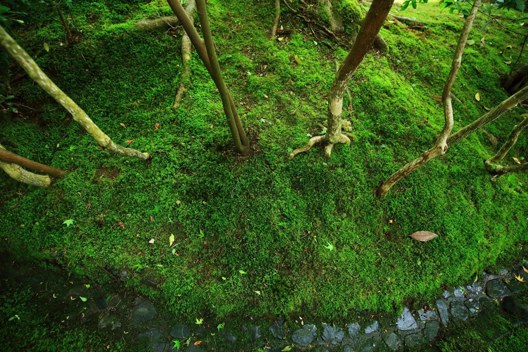 瑠璃光院 写真 高画質 山露路の庭 苔