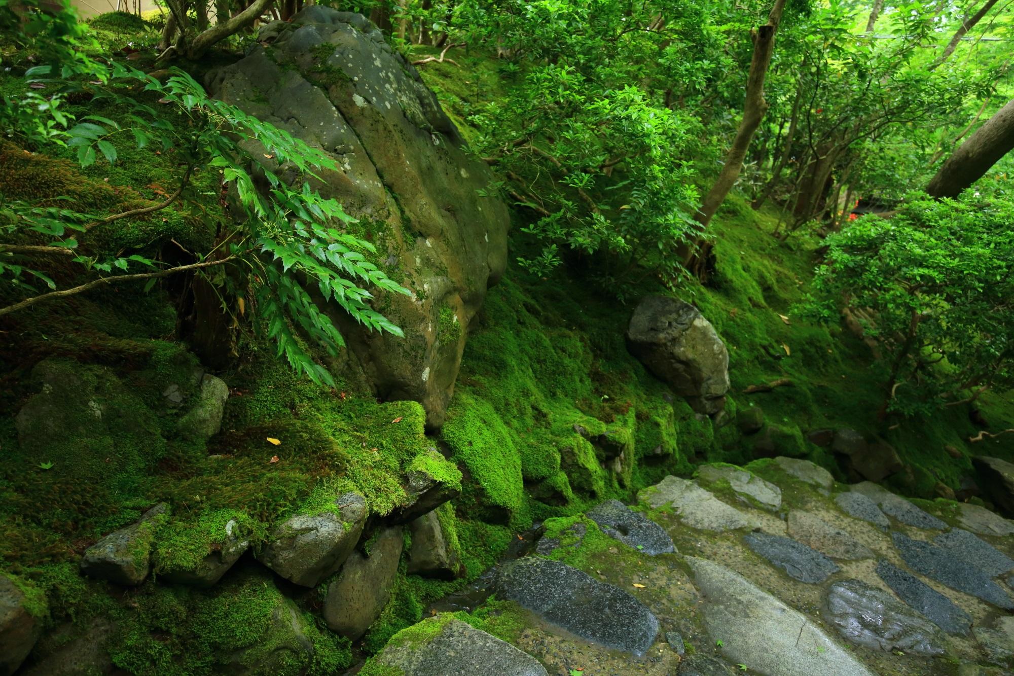 高画質 瑠璃光院 写真 参道 緑 綺麗