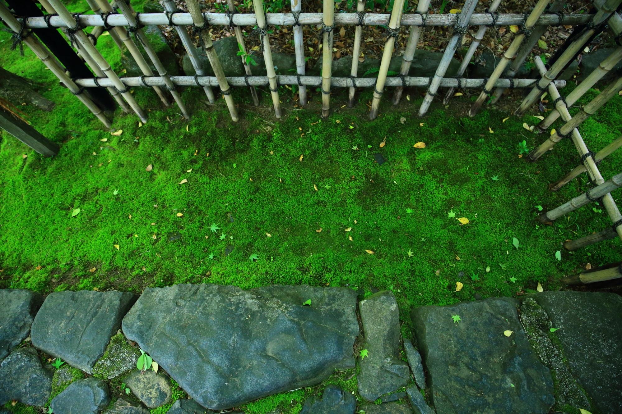 蓮華寺の鮮やかな深い緑の苔