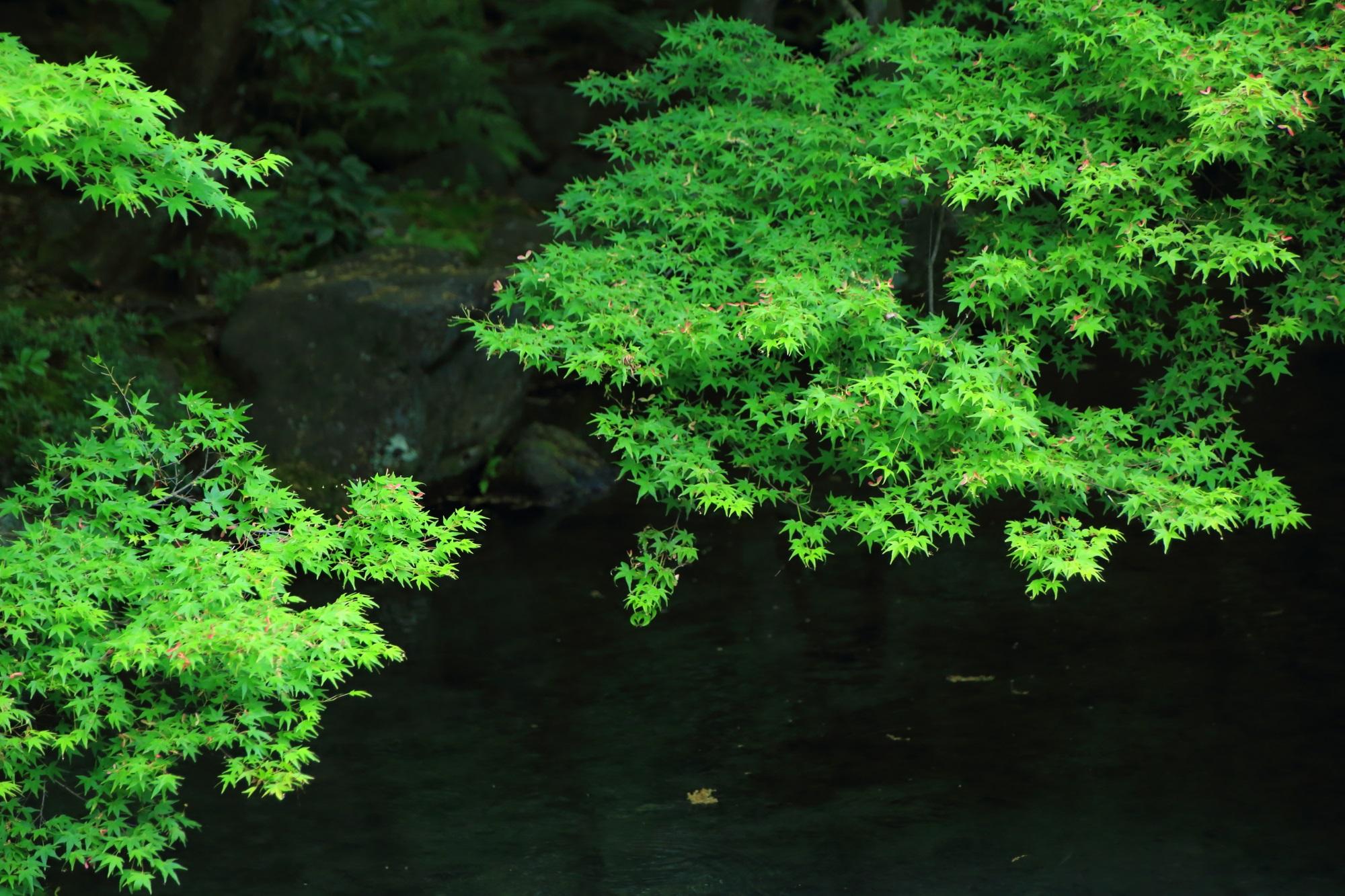 青もみじ 蓮華寺 庭園 綺麗