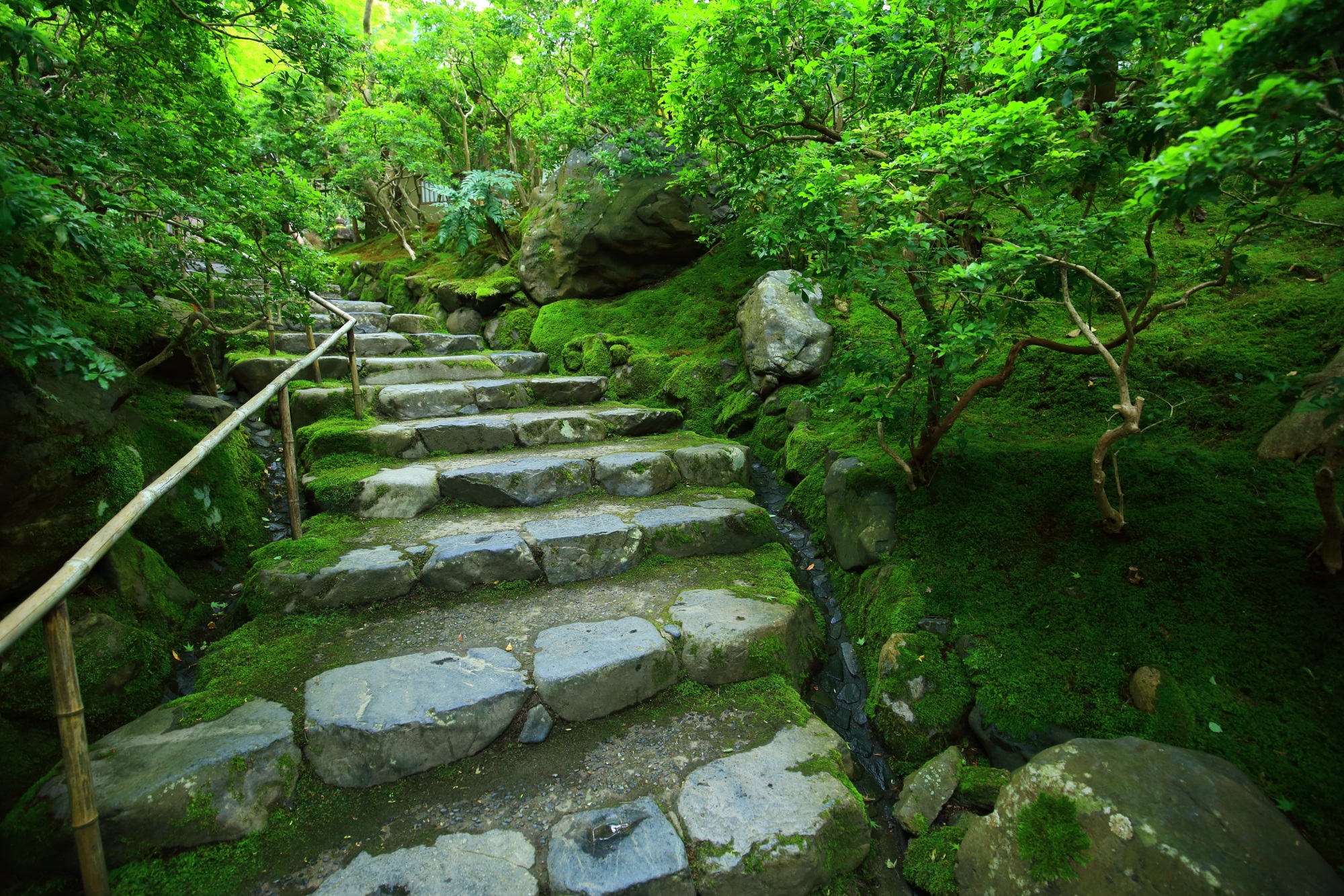 八瀬瑠璃光院の参道の綺麗な苔と緑