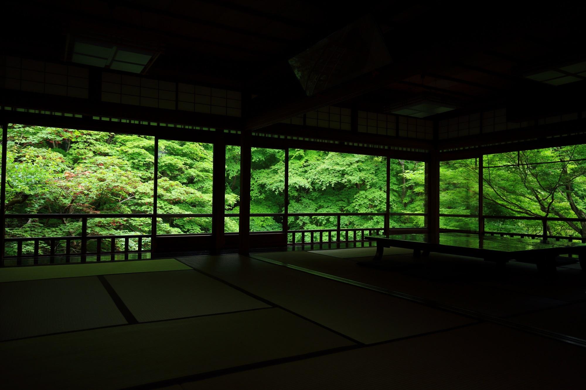 瑠璃光院 新緑 絶景 書院 瑠璃の庭