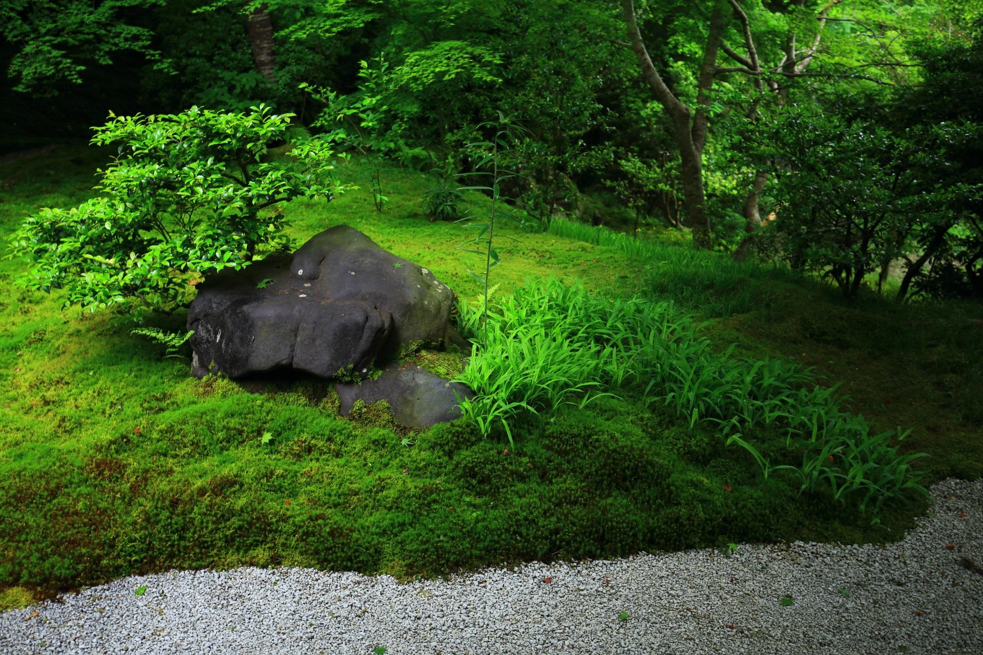 鮮やかな新緑と苔につつまれた瑠璃光院の瑠璃の庭