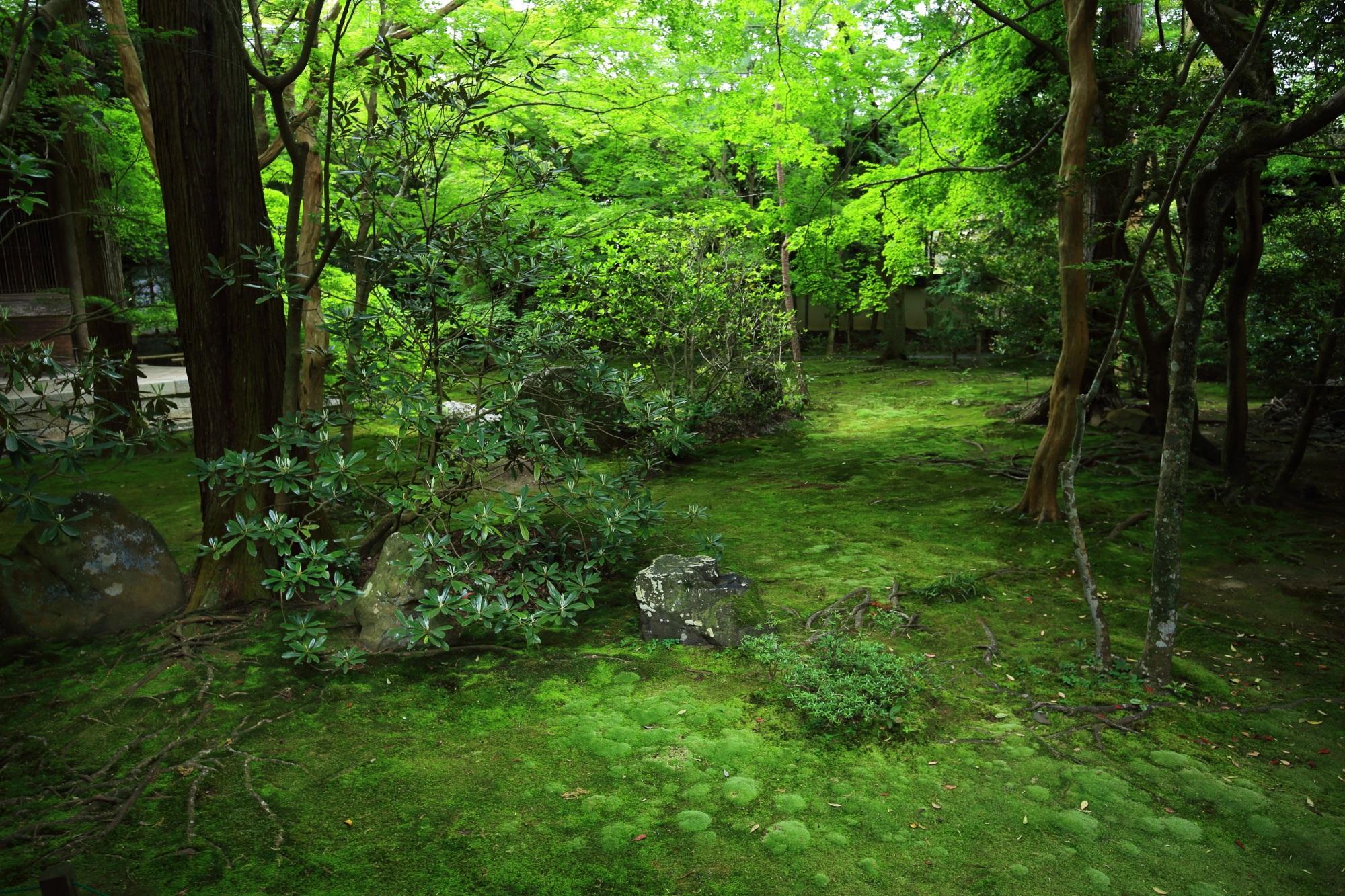 蓮華寺の緑につつまれた苔の庭園