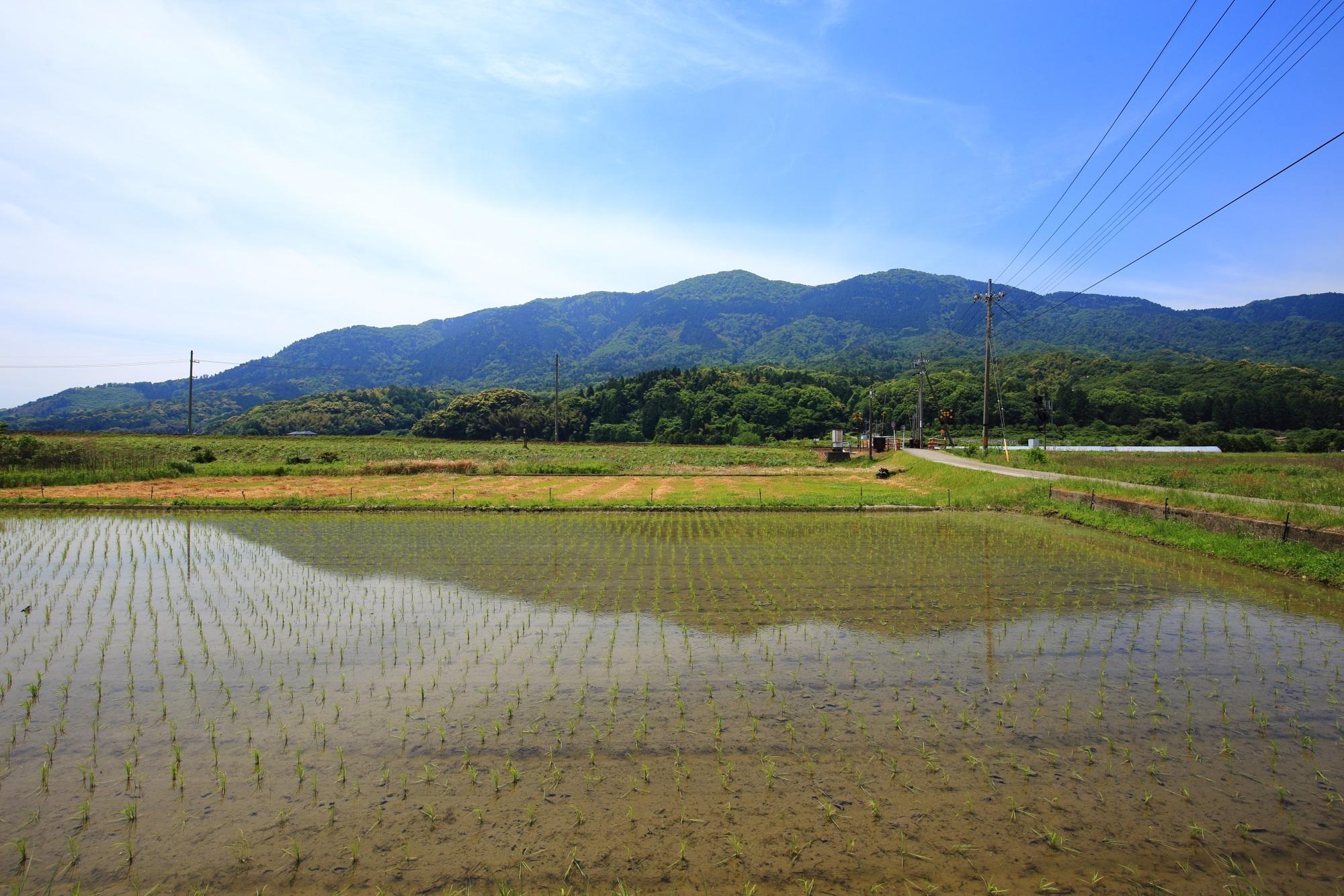 宮津の風情ある田舎の田んぼ