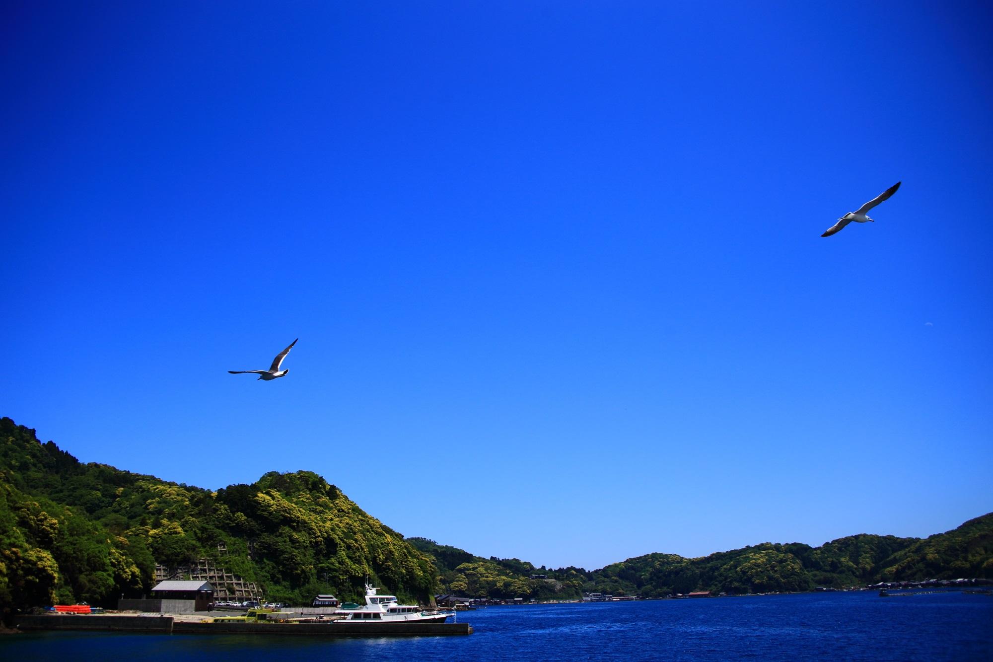 出航すると同時にいっぱいやってくる伊根湾のカモメ