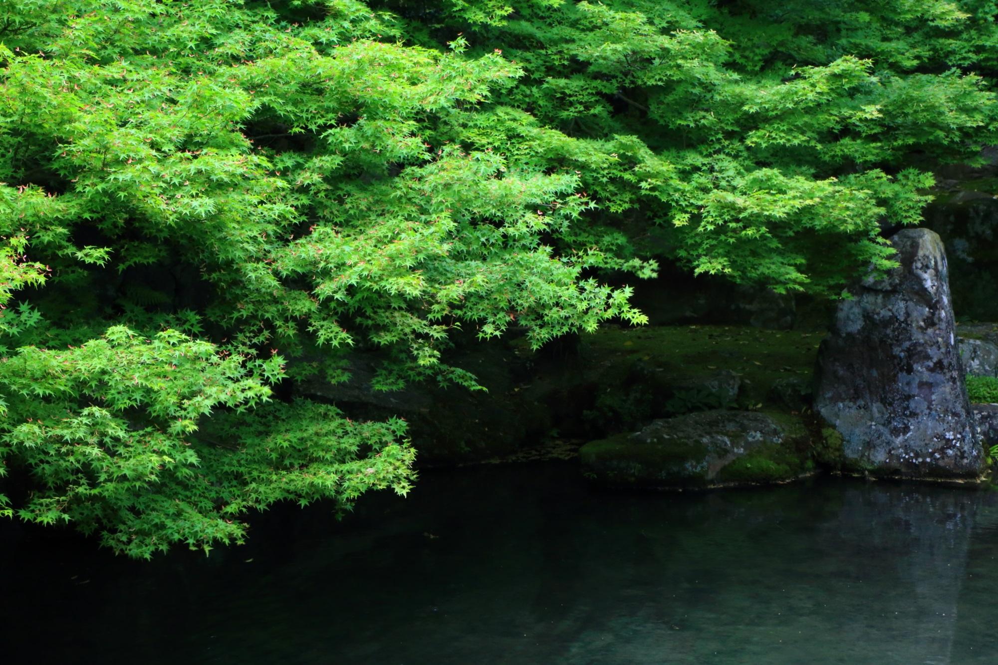 高画質 蓮華寺 写真 新緑
