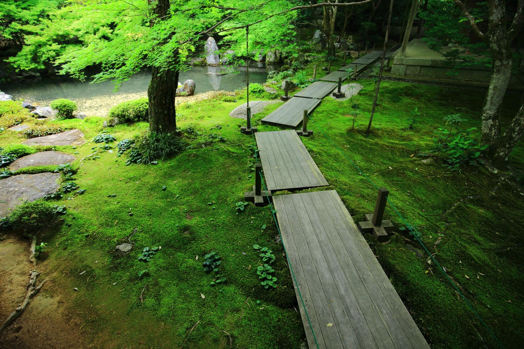 緑の苔と青もみじにつつまれた蓮華寺の庭園