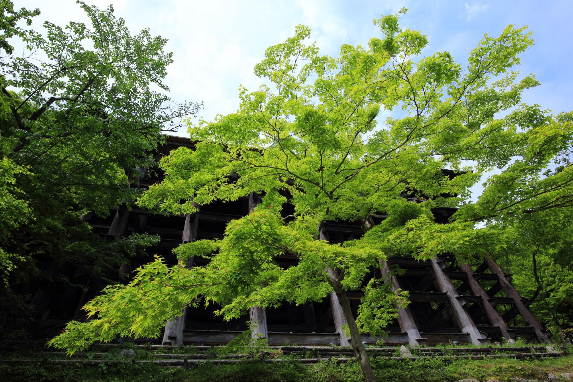 清水寺 新緑 広がる緑と清水の舞台