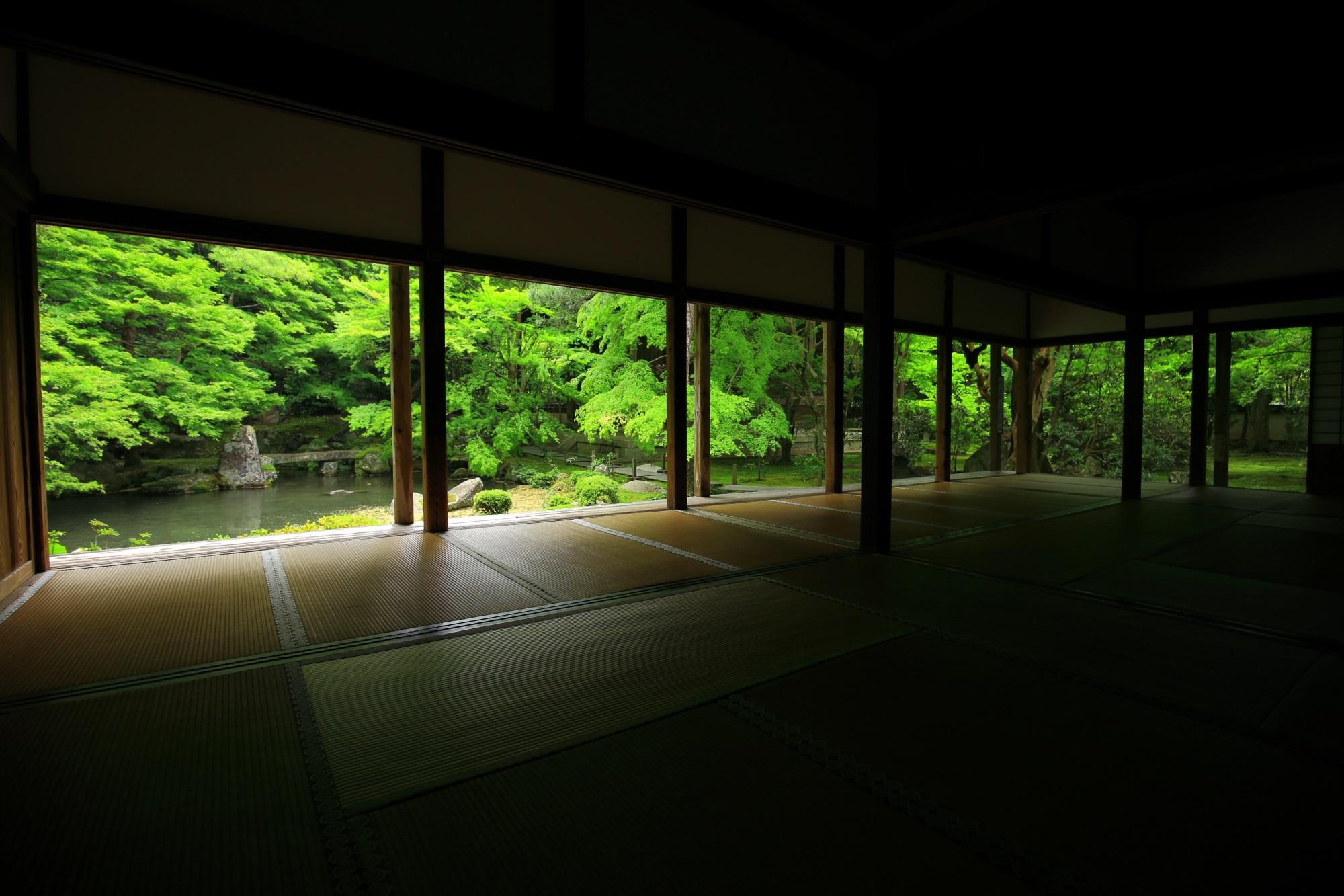 蓮華寺 新緑と苔 絶品の緑と静けさ