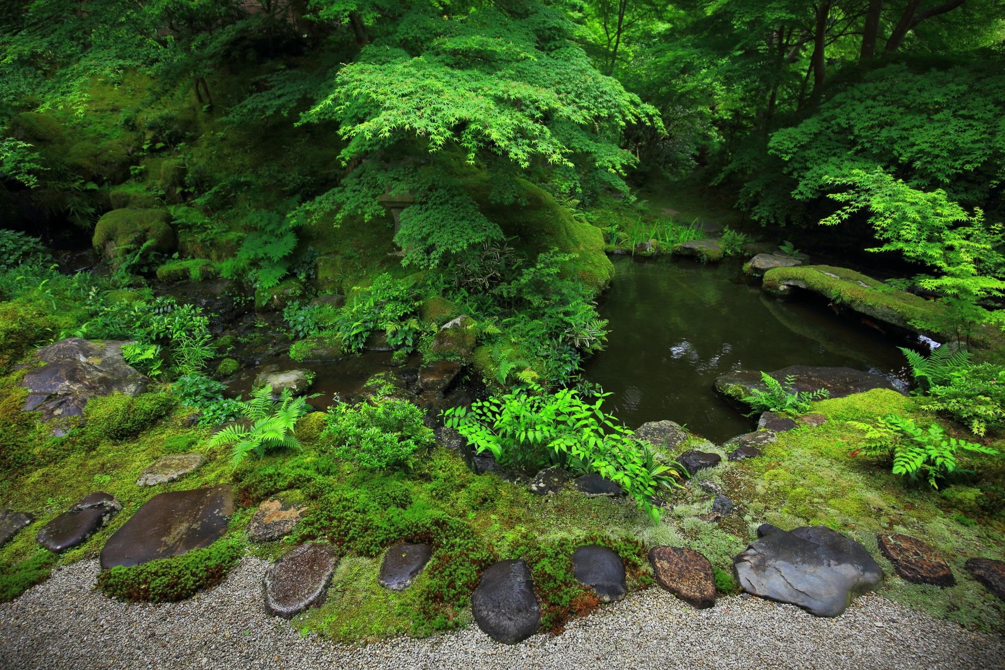 瑠璃光院 新緑と苔 秘境の緑