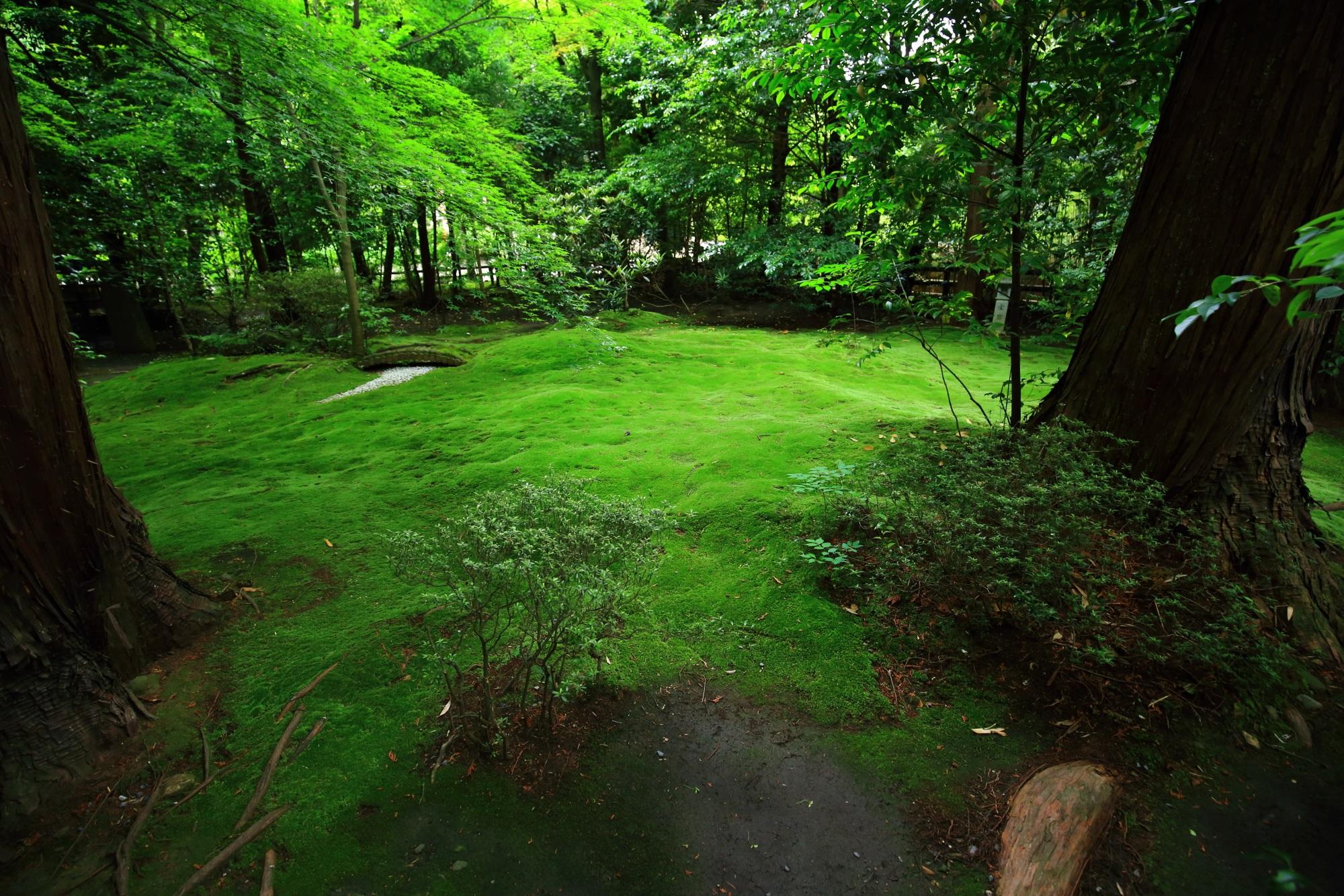 縁結びの野宮神社(ののみやじんじゃ)の苔庭