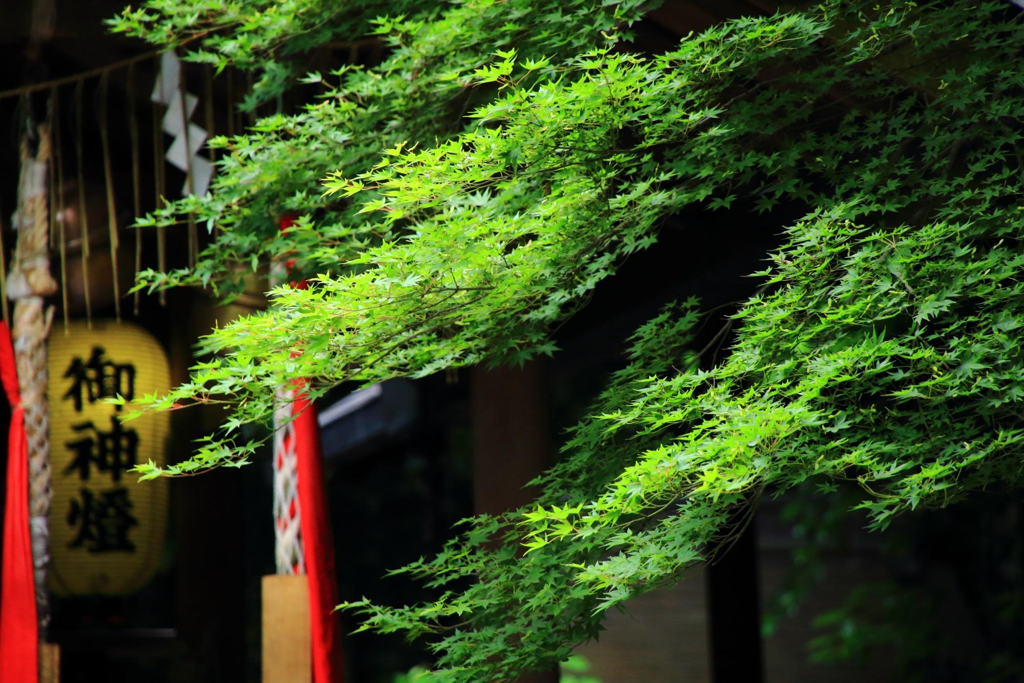 京都嵐山の野宮神社の本殿と青もみじ