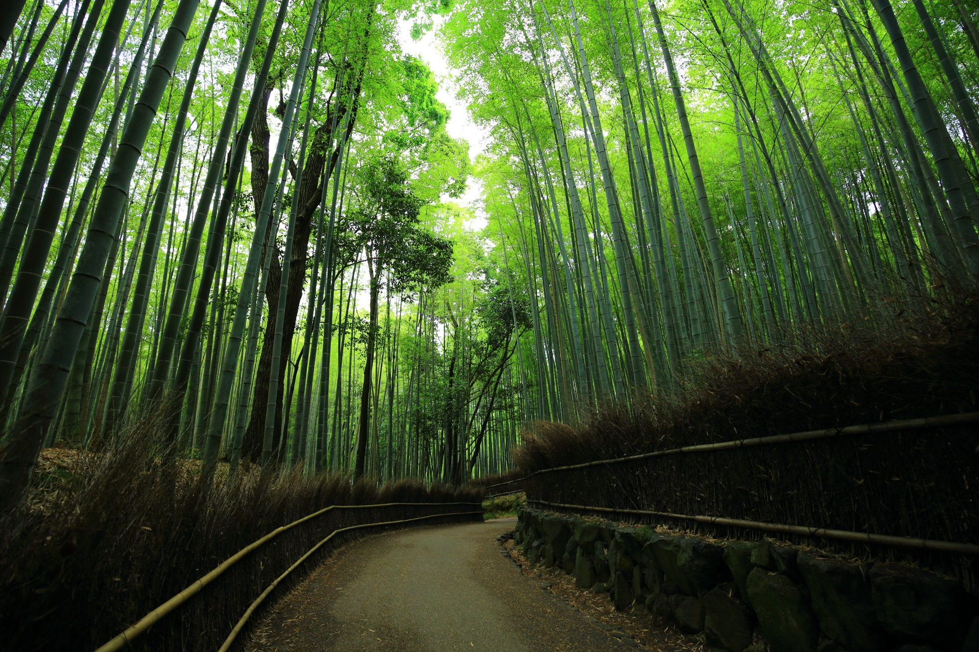 Chikurin-no-michi Arashiyama Kyoto Road of bamboo forest
