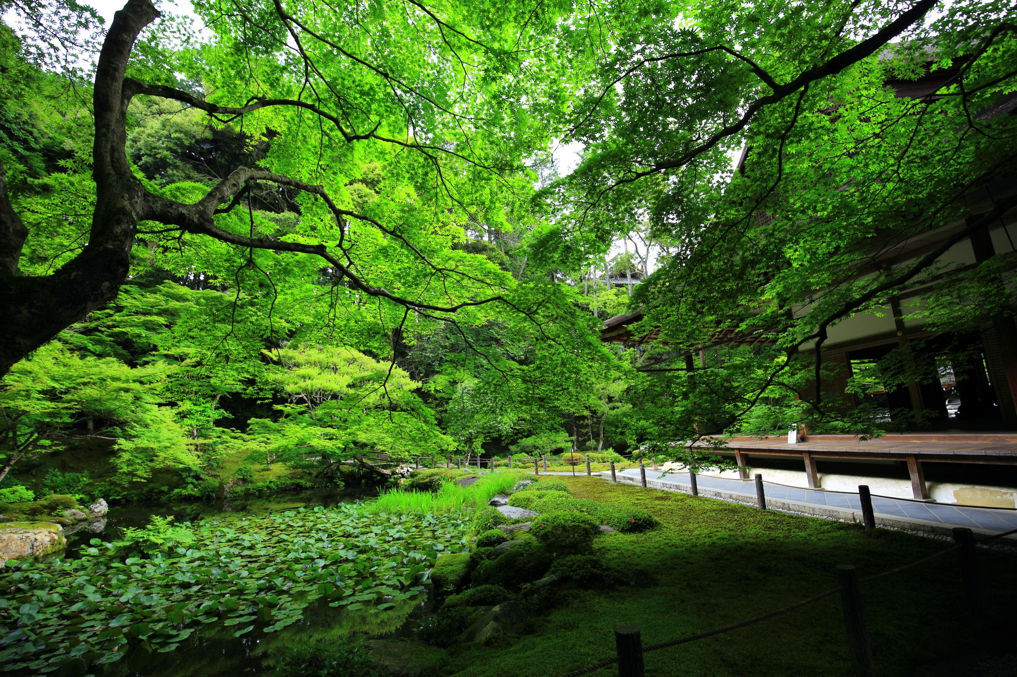 Kyoto Nanzen-in Temple blue maple and fresh green