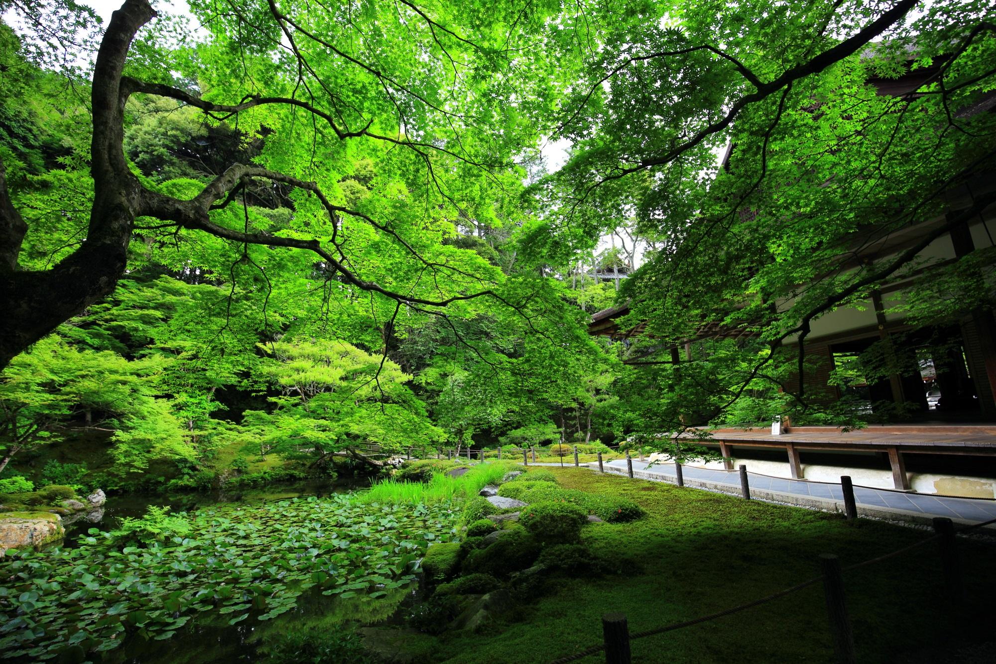 Kyoto Nanzen-in Temple blue maple and fresh green