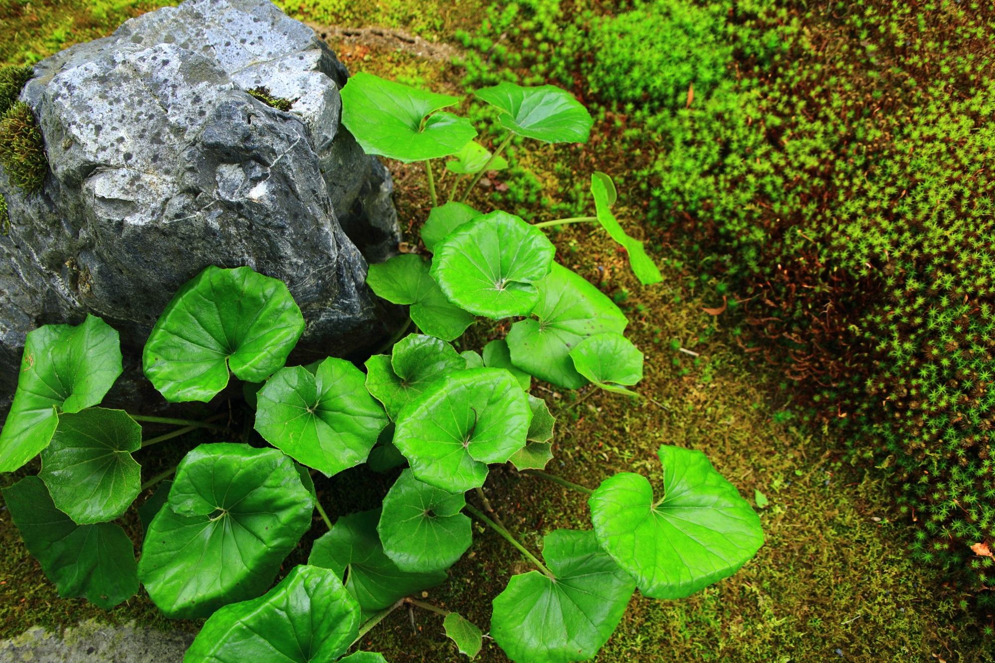 永観堂の庭園の美しい緑