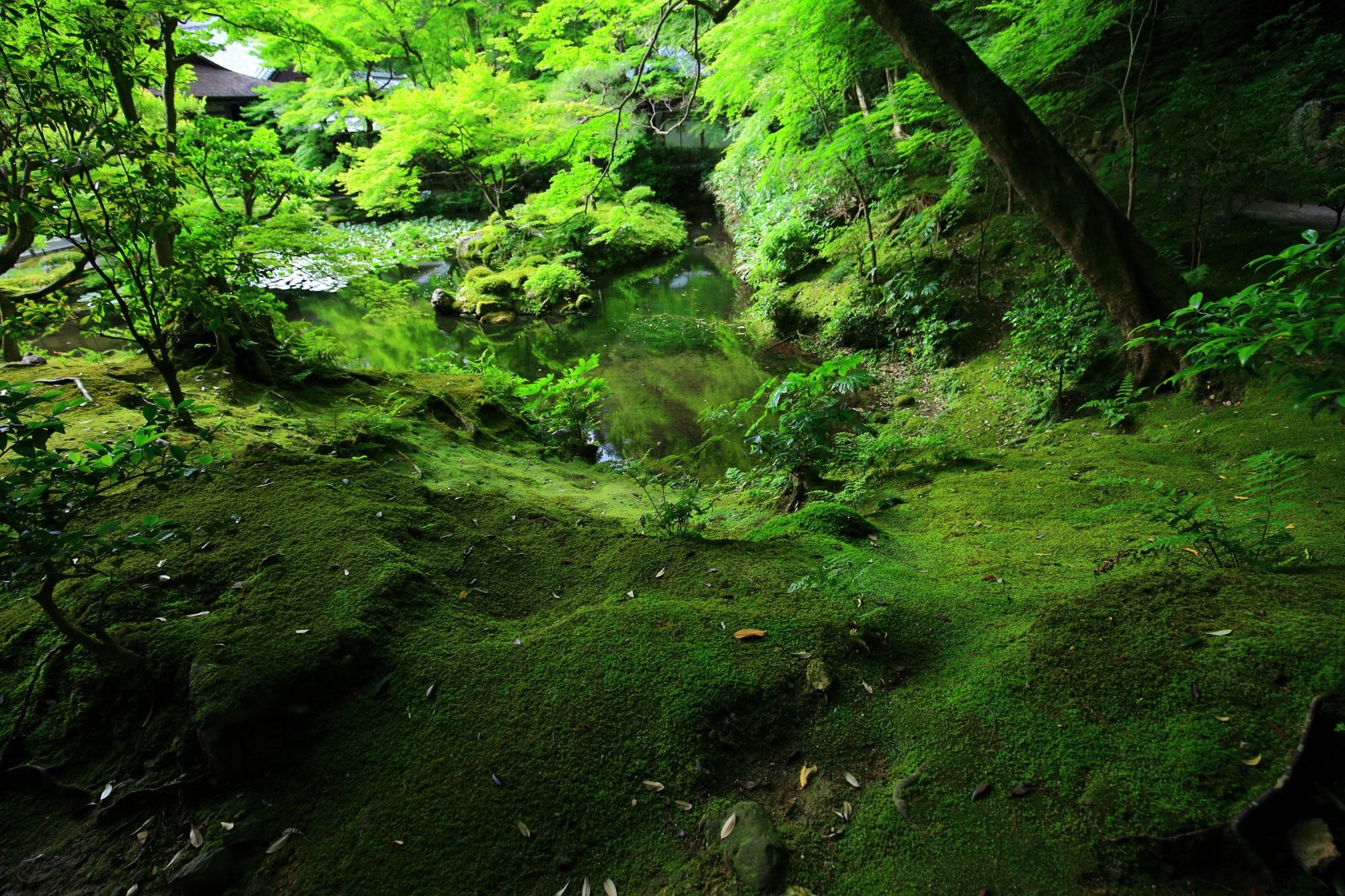 南禅院の深い緑の風情ある苔