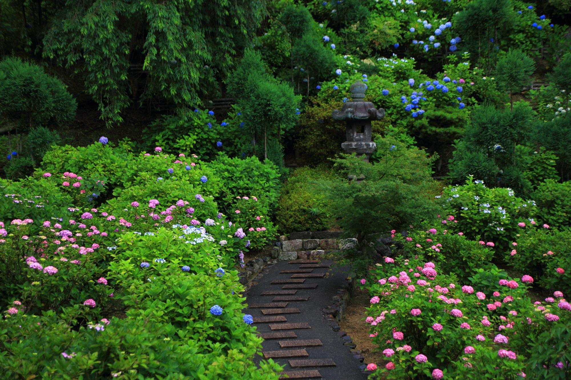 善峯寺の初夏の庭園を彩る華やかなピンクの紫陽花
