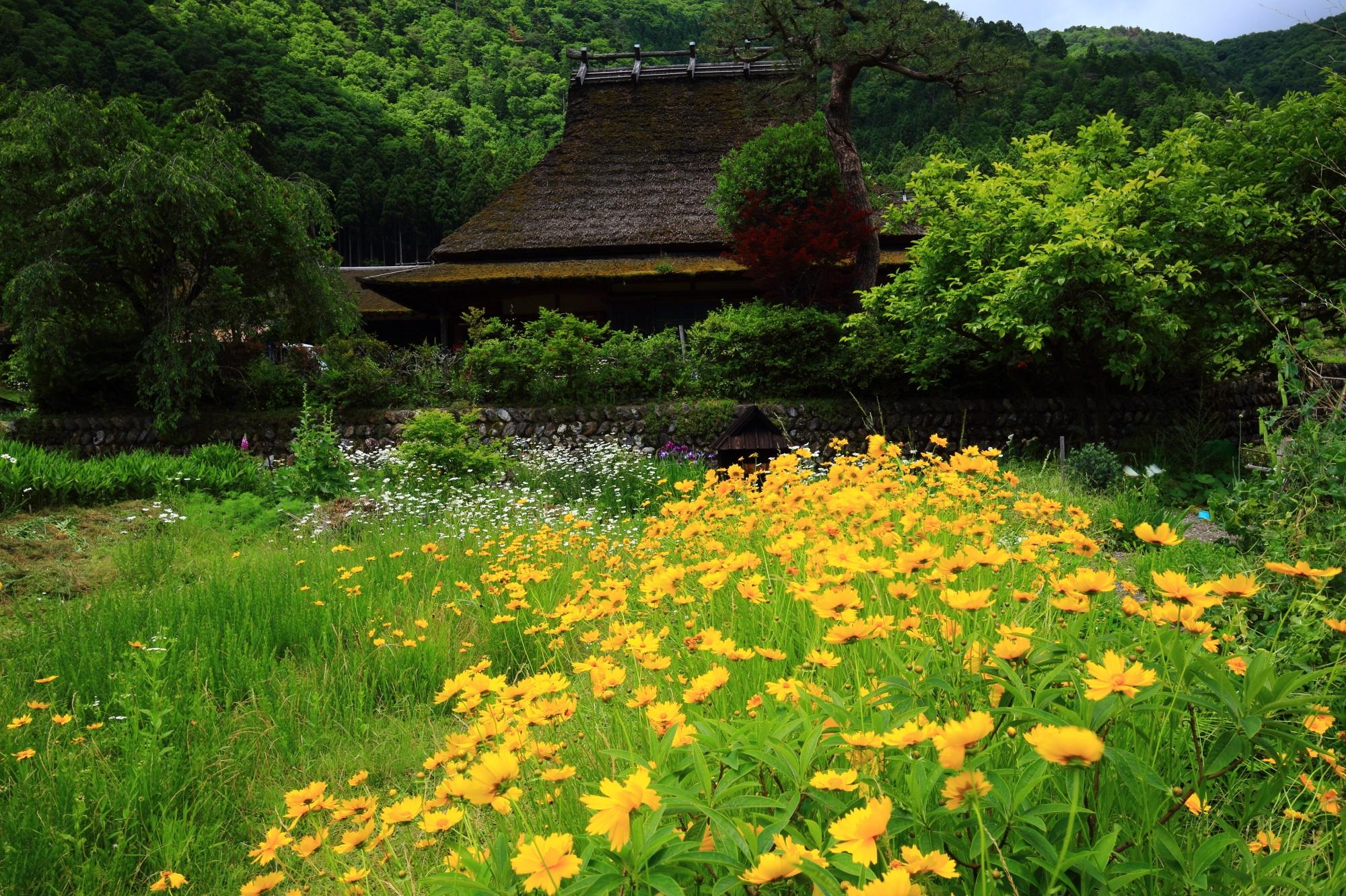 鮮やかな花や緑いっぱいのかやぶきの里