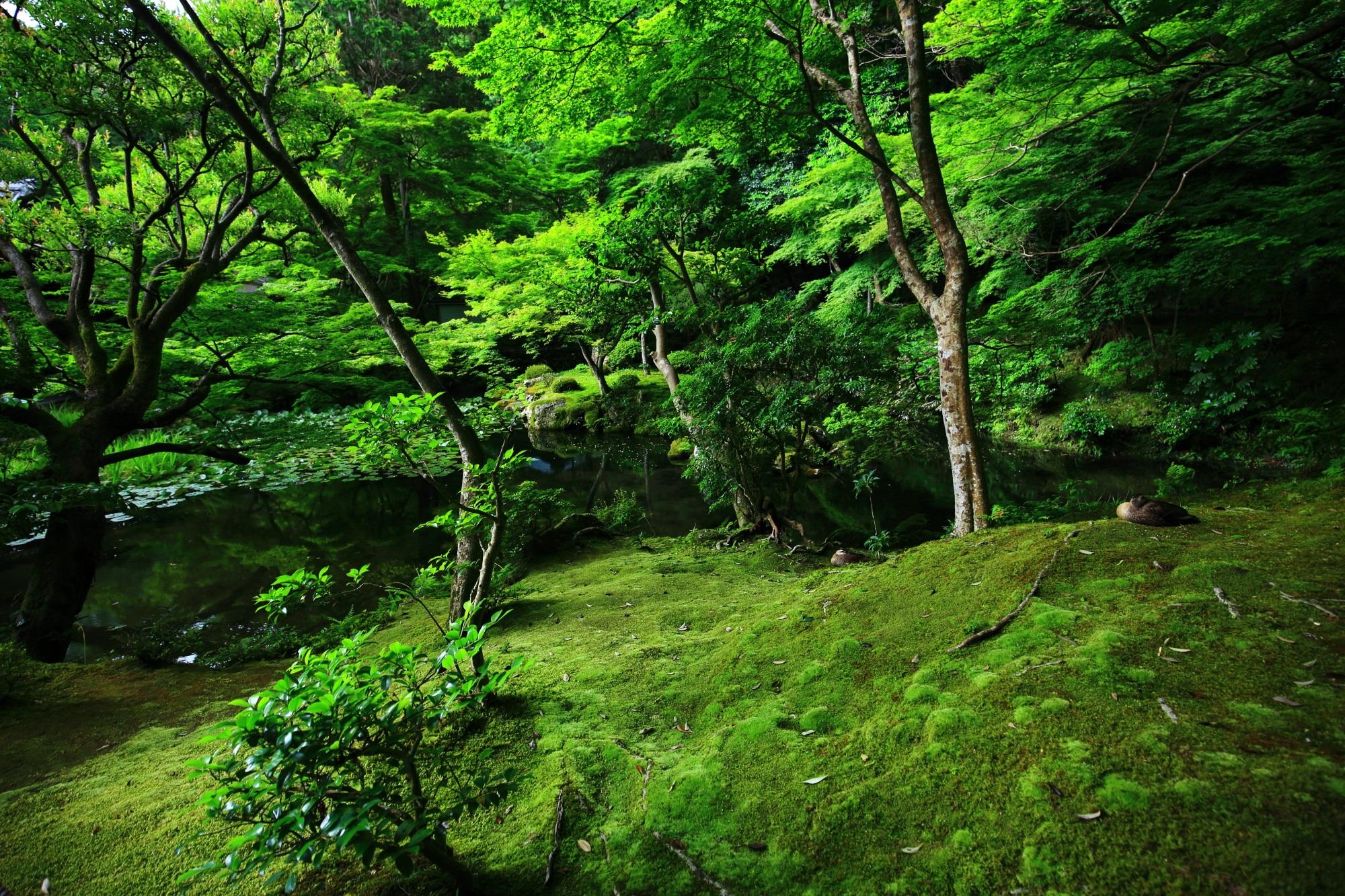 南禅院 高画質 写真 苔 緑 綺麗