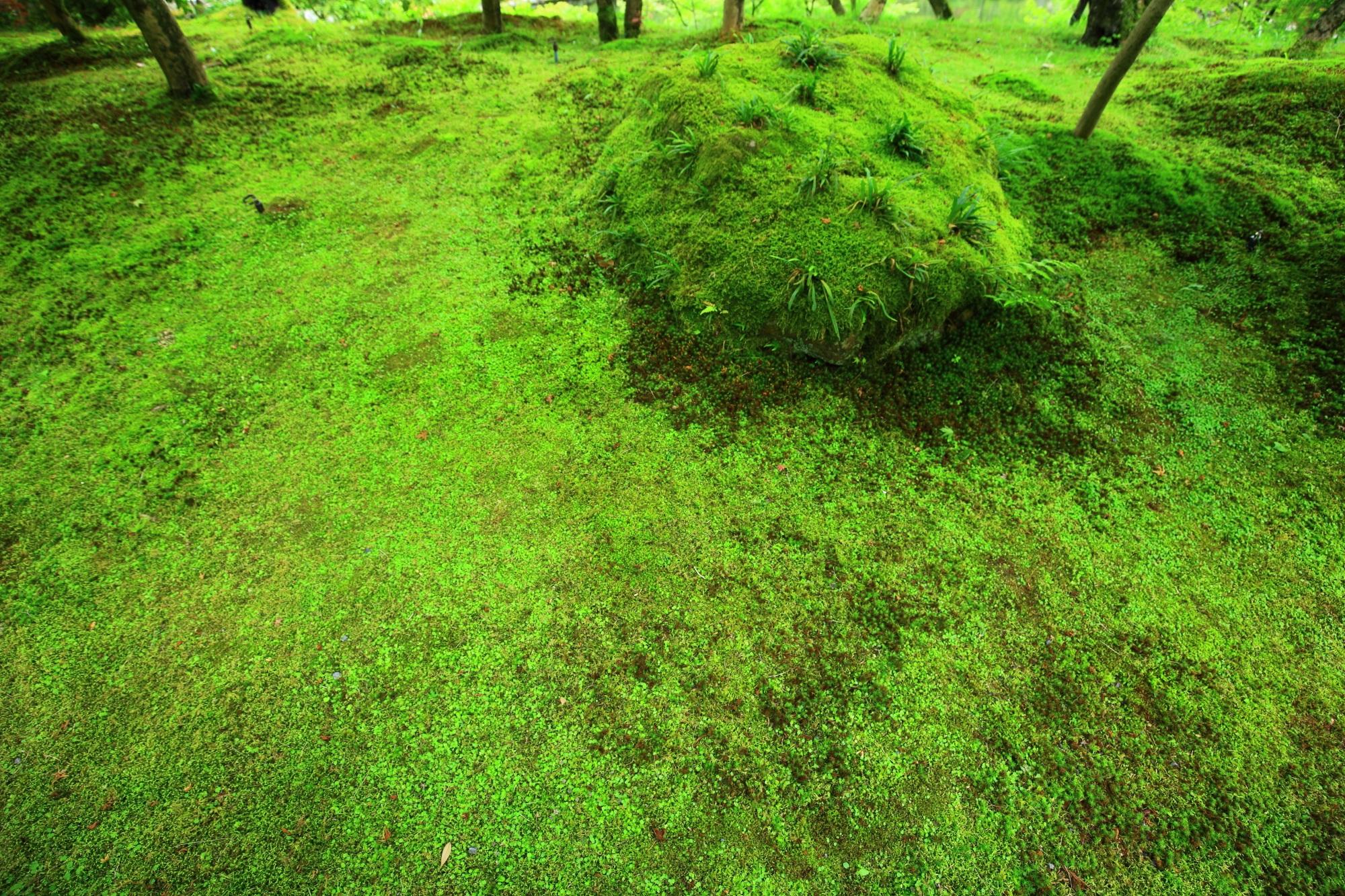 禅林寺 苔 緑 鮮やか