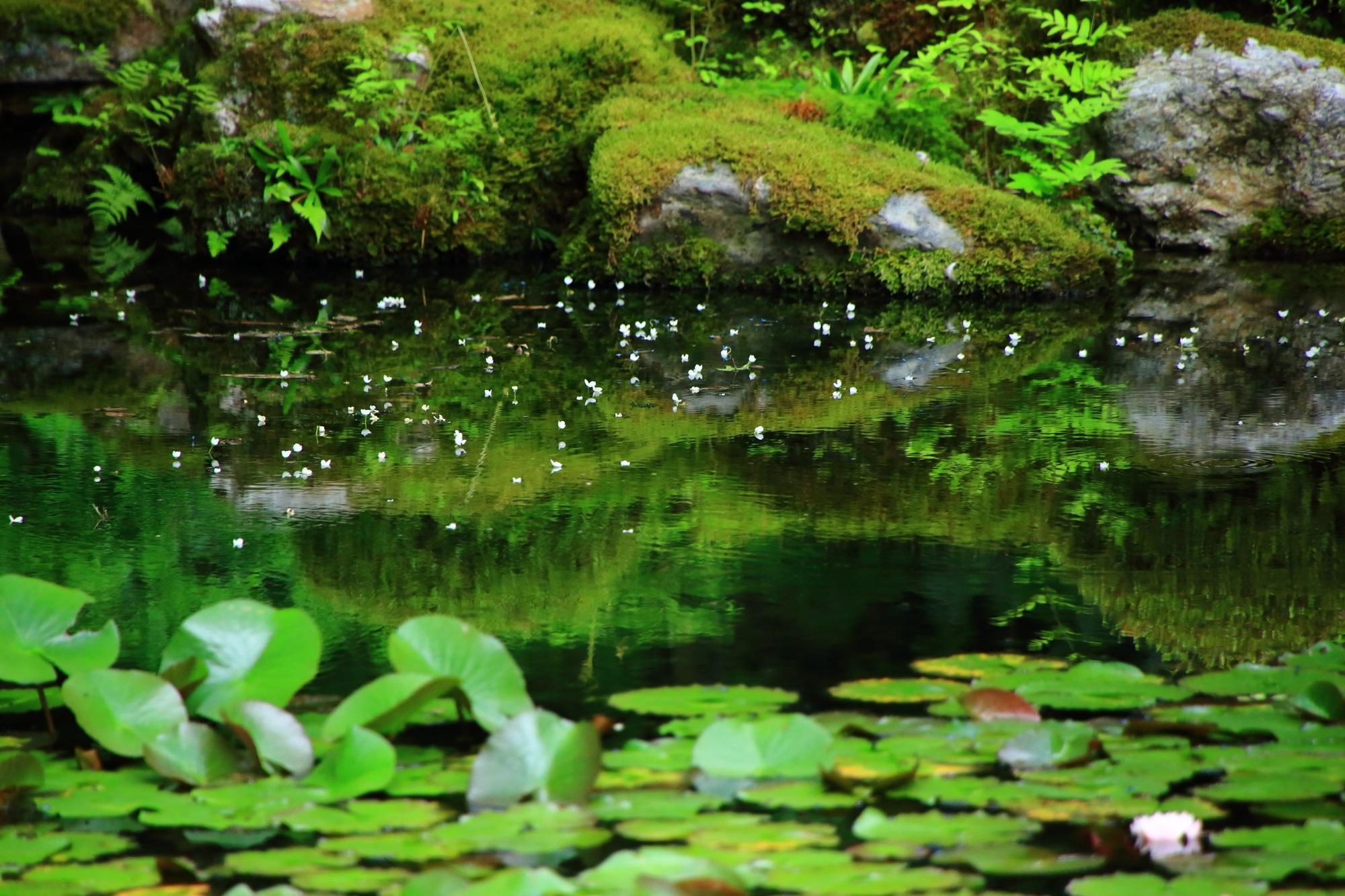 南禅院(なんぜんいん)の見事な池泉回遊式庭園