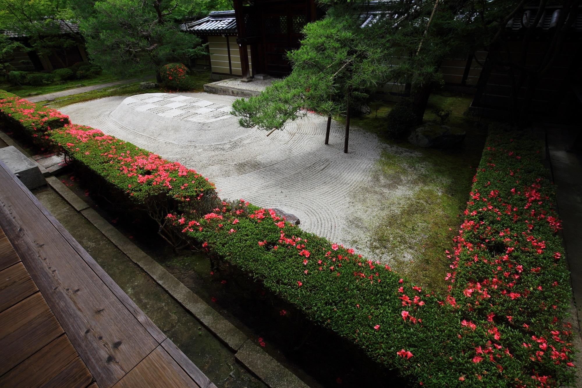 永観堂の唐門前庭の華やかなサツキと白砂