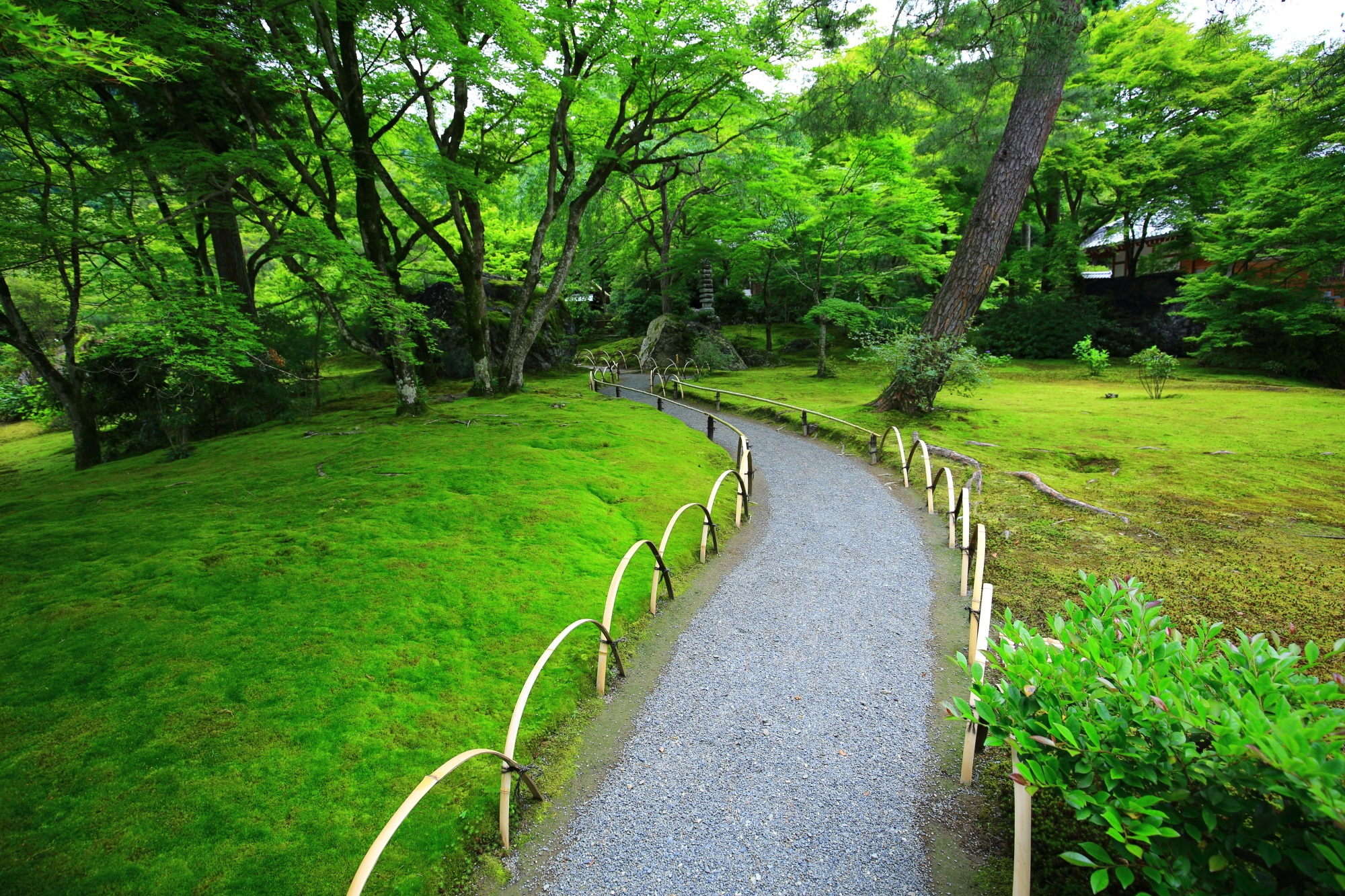 moss and blue maple Hogonin-Tempele in Kyoto Japan