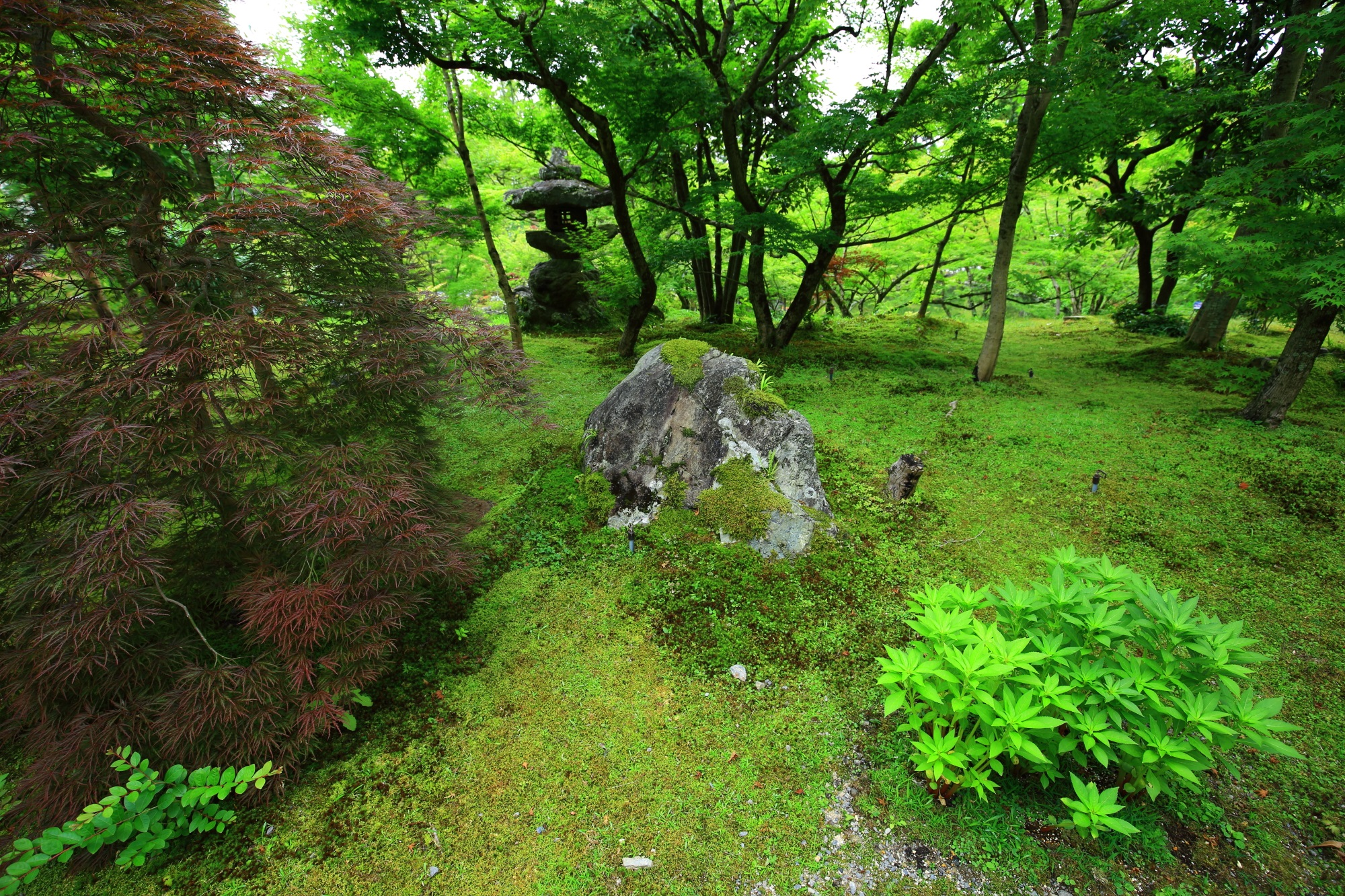 永観堂(禅林寺)の灯籠と青もみじと苔
