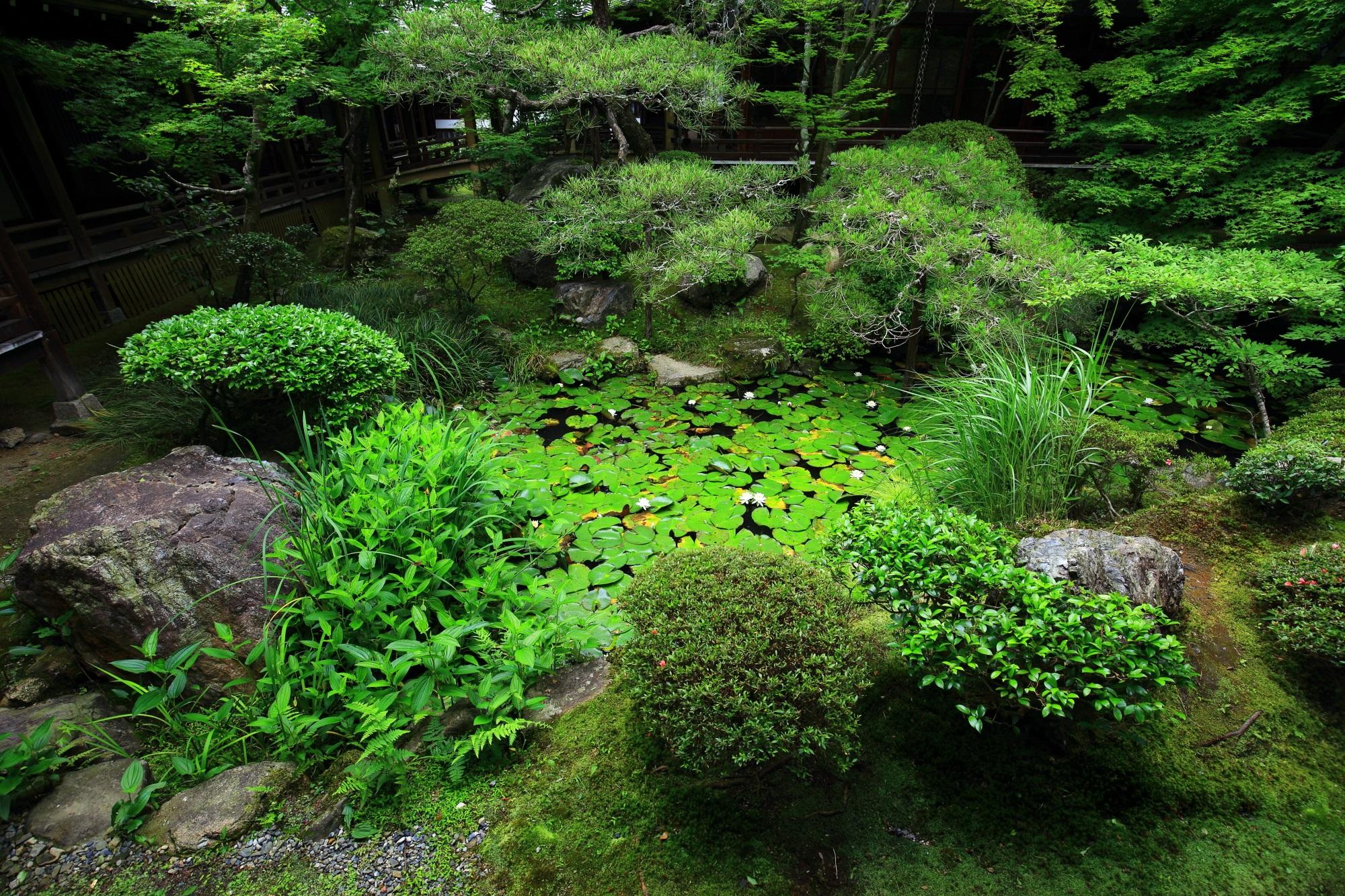 素晴らしい緑につつまれた永観堂の方丈北庭