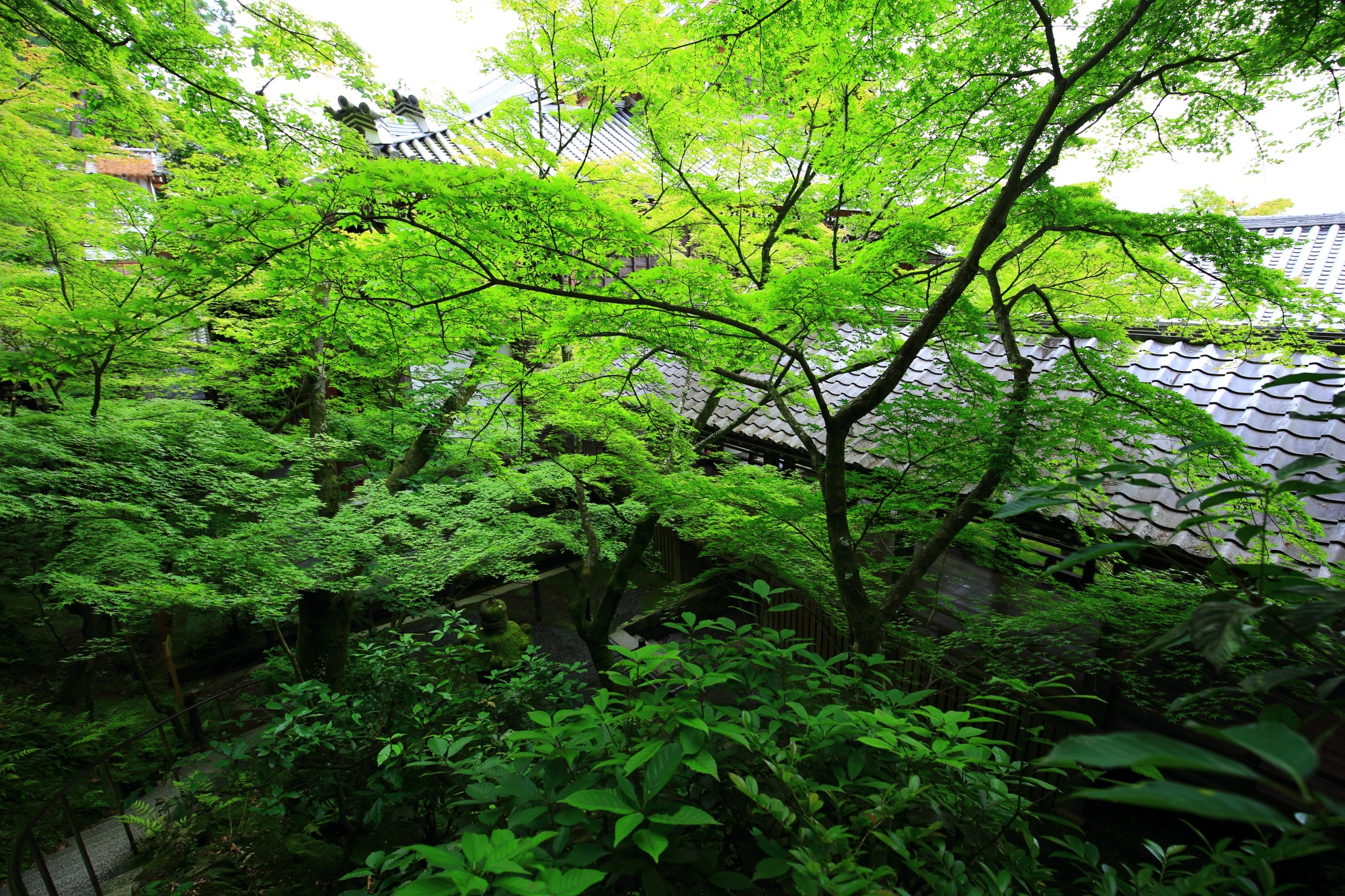 Kyoto Eikan-do Temple fresh green and blue maple