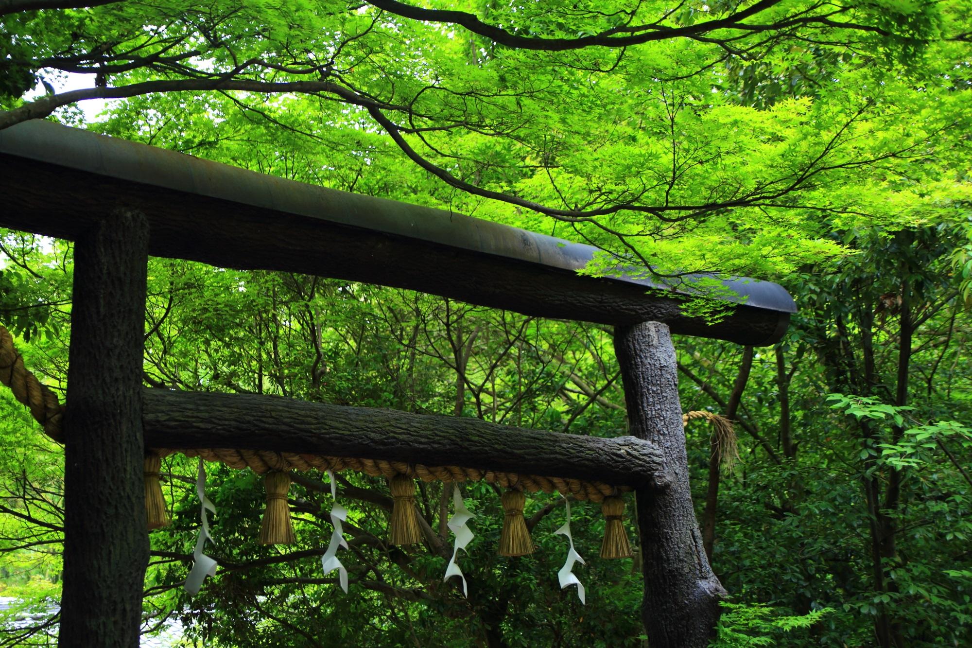 黒木鳥居 野宮神社 写真 高画質