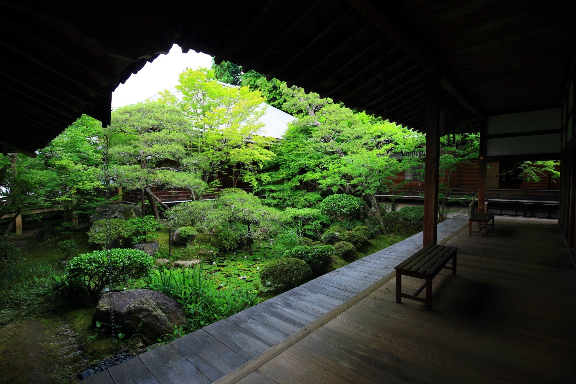 方丈北庭 緑 綺麗