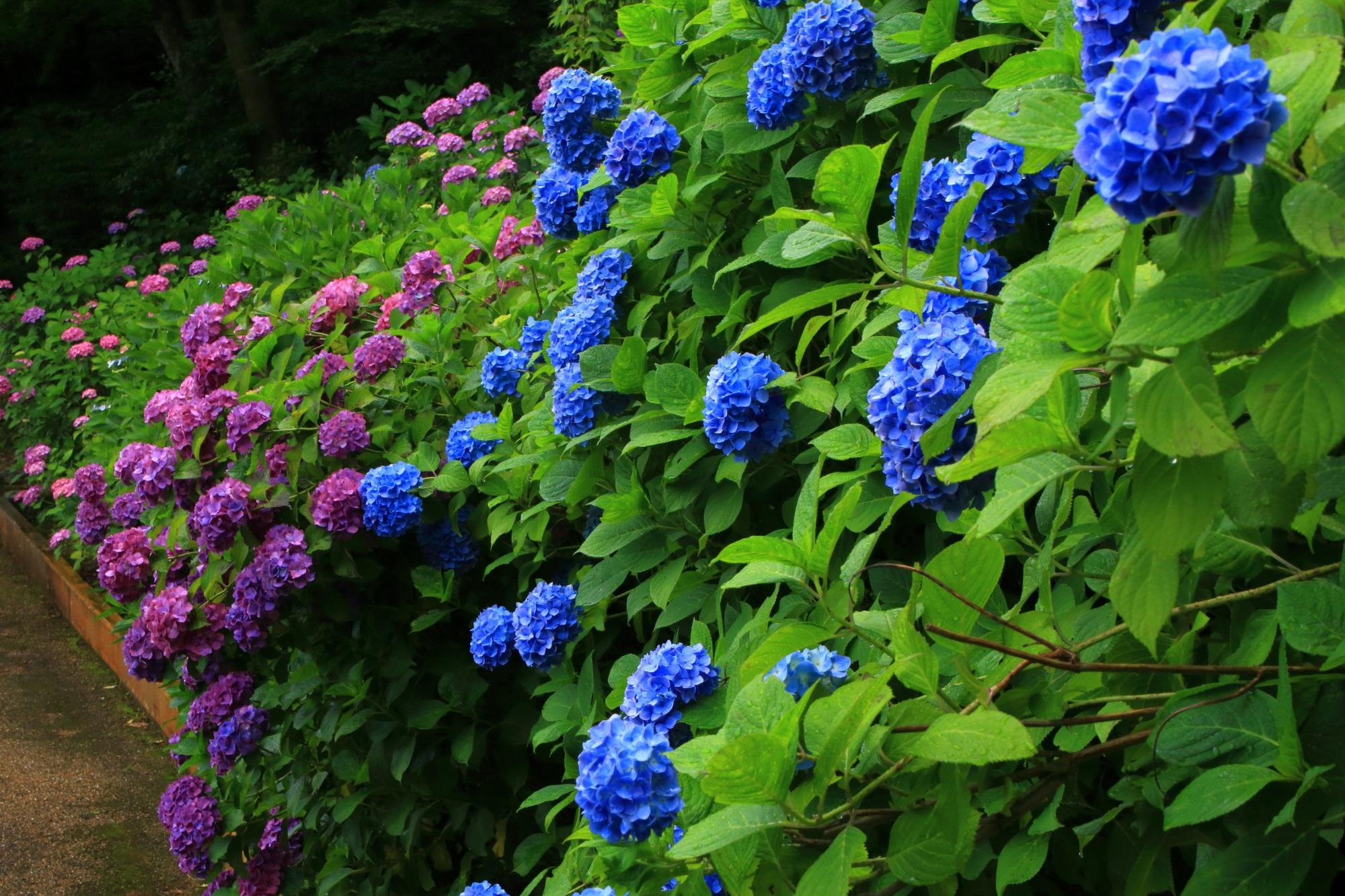 善峯寺の青や紫や緑などの綺麗な色のコントラスト
