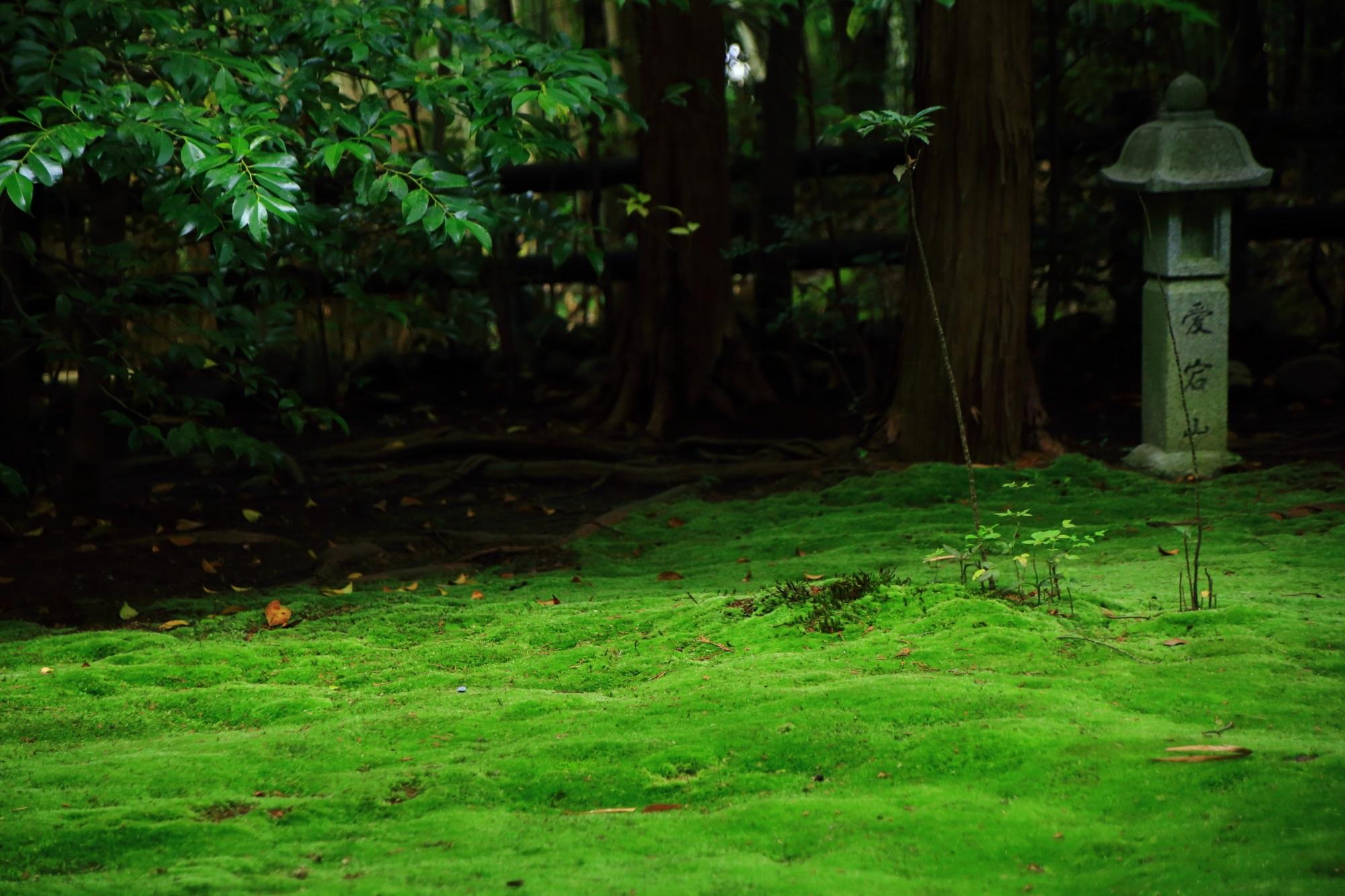 野宮神社の燈籠と苔
