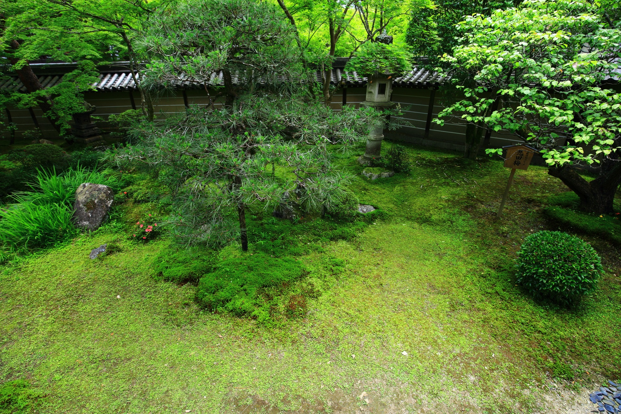 green garden Eikando-Temple in Kyoto Japan